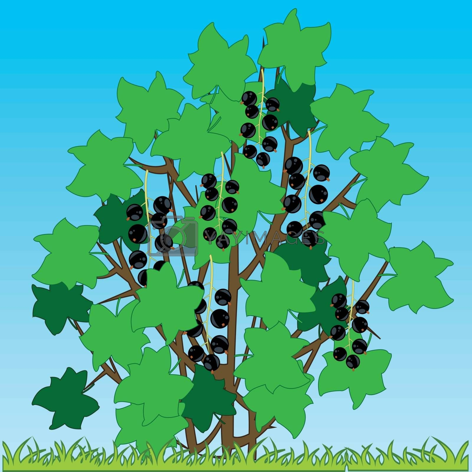 Vector illustration of the bush of the currant with ripe berry on glade