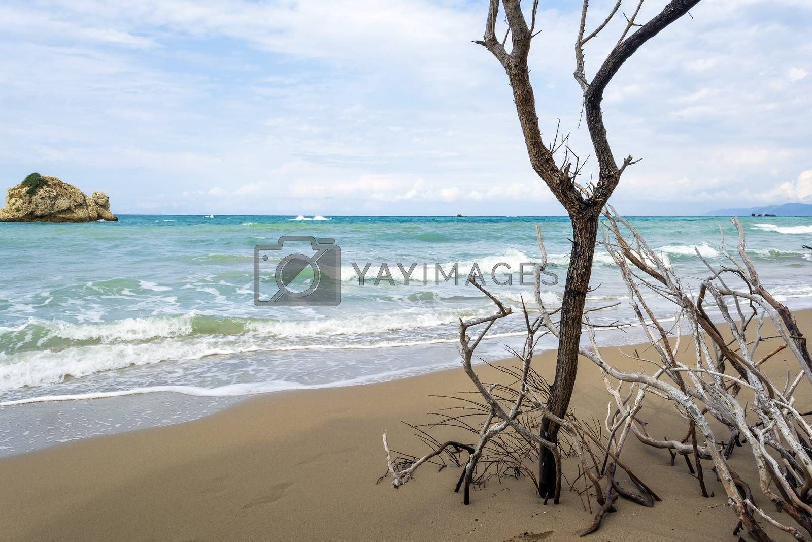 A lonely tree at Prasoudi Beach in the island of Corfu, Greece by ankar