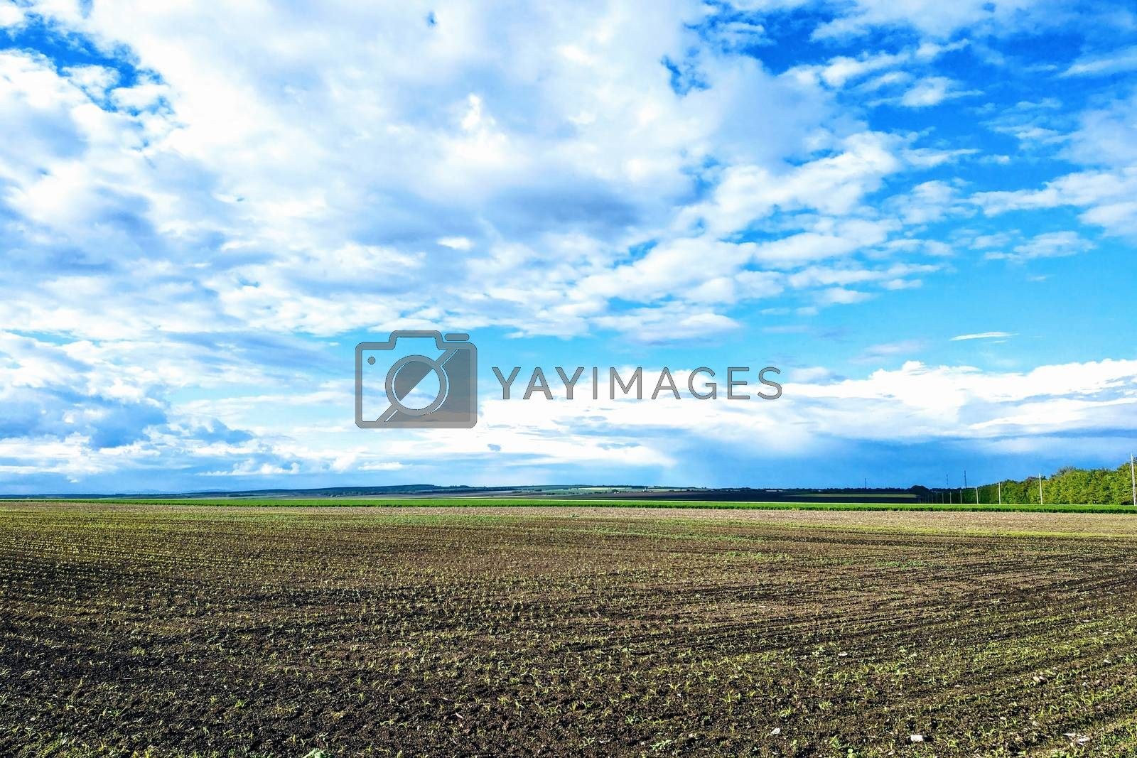 Royalty free image of Beautiful landscape with green field and large white clouds. by kip02kas