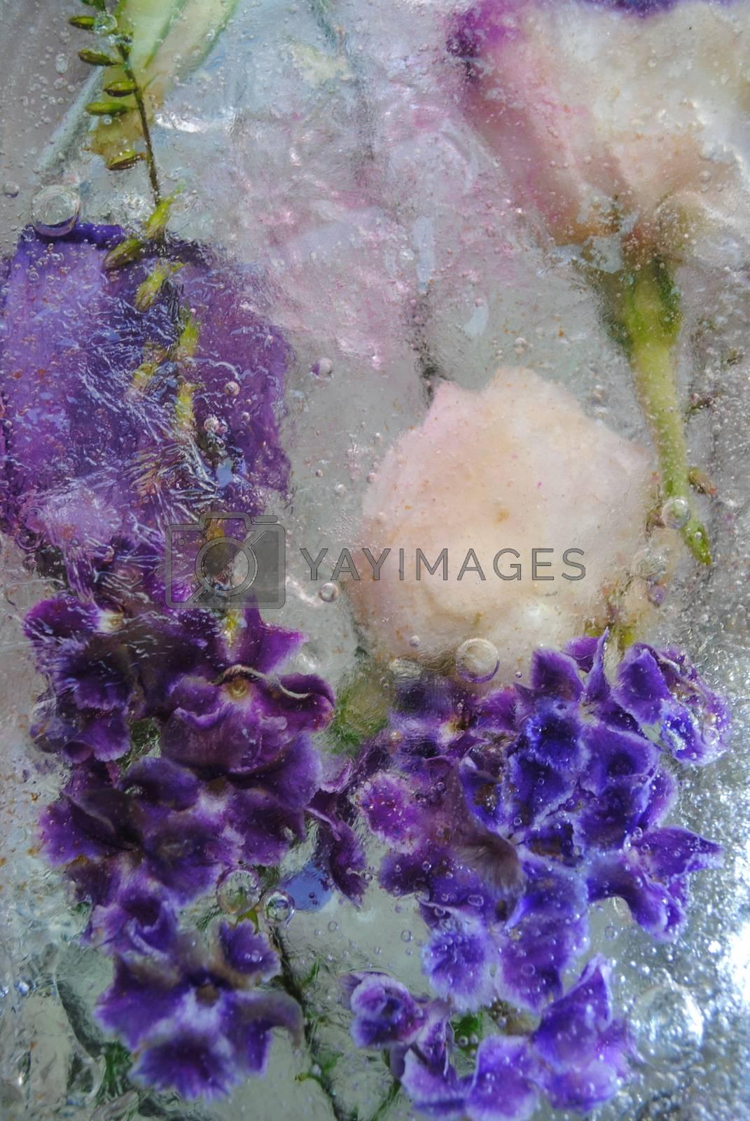 Beautiful frozen flowers by Hanin Nataly