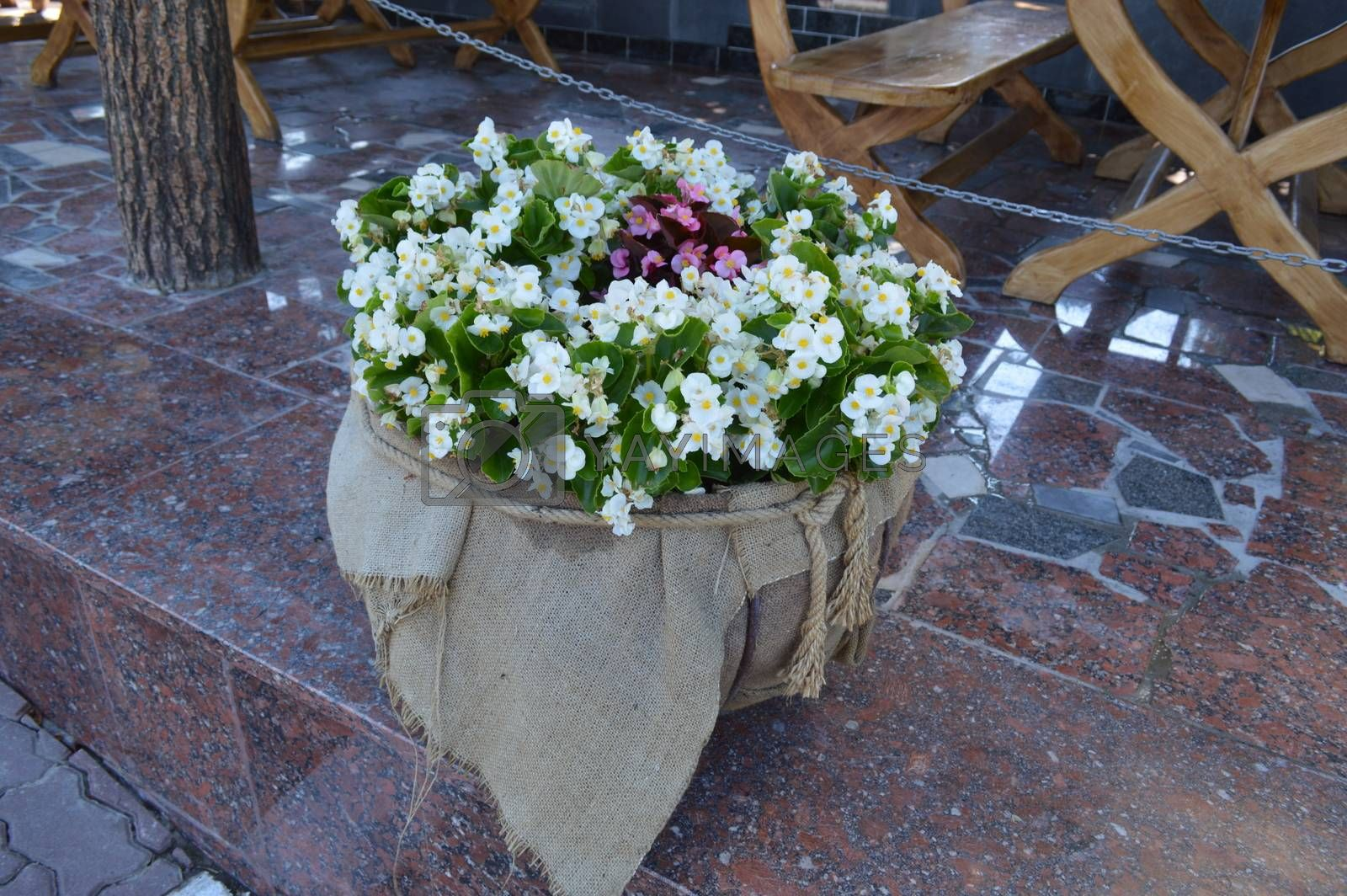 Flower bouquets in flowerpots of different compositions
