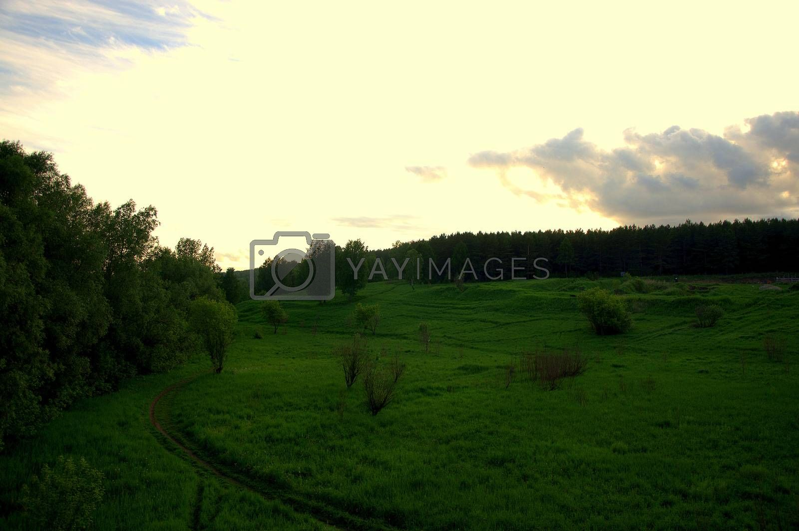 The road through the field is surrounded by bushes and meadow grass, which goes under sunset clouds. Siberia.