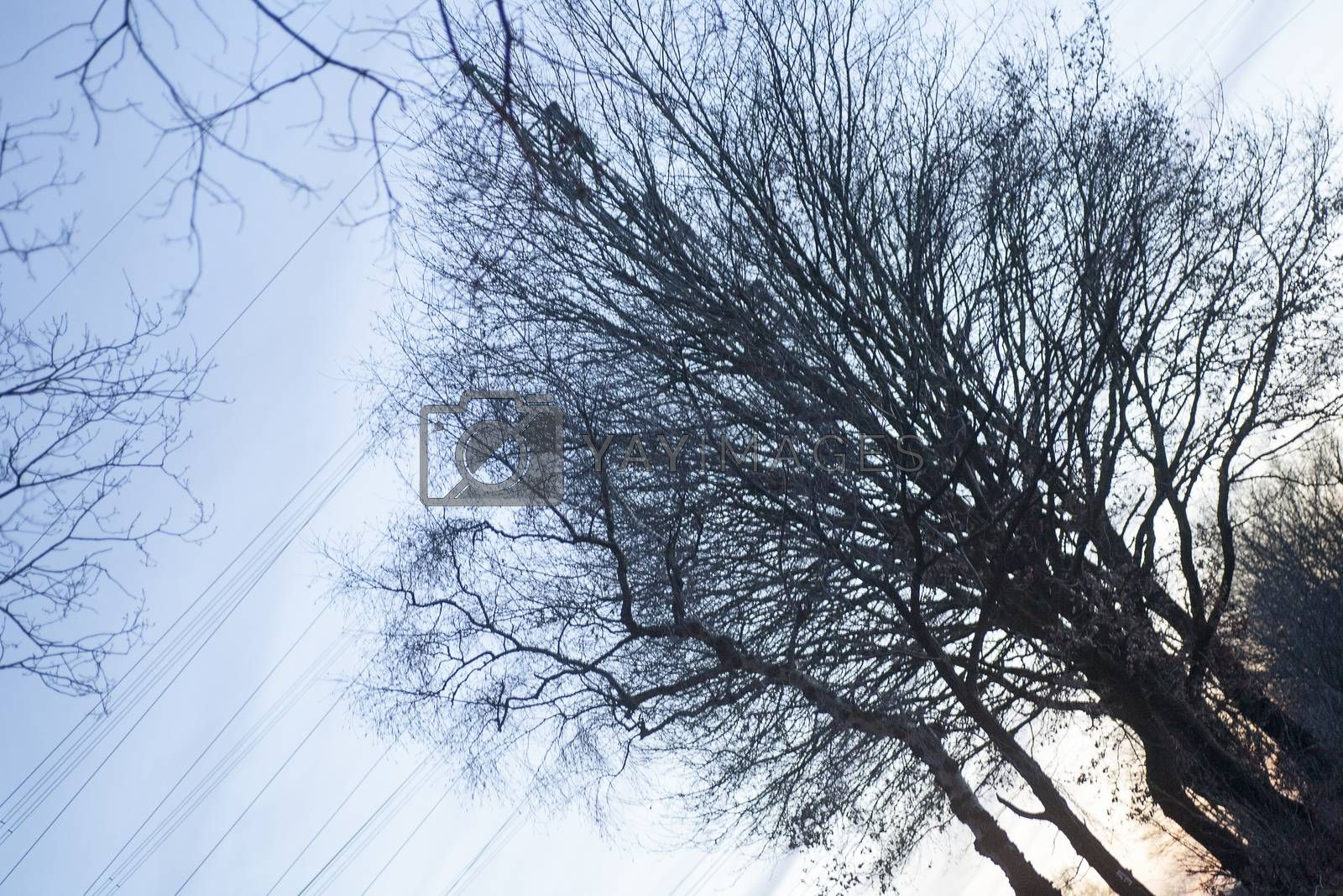 Tree diagonal on electric tower vintage background fine art in high quality prints products by BakalaeroZz Photography