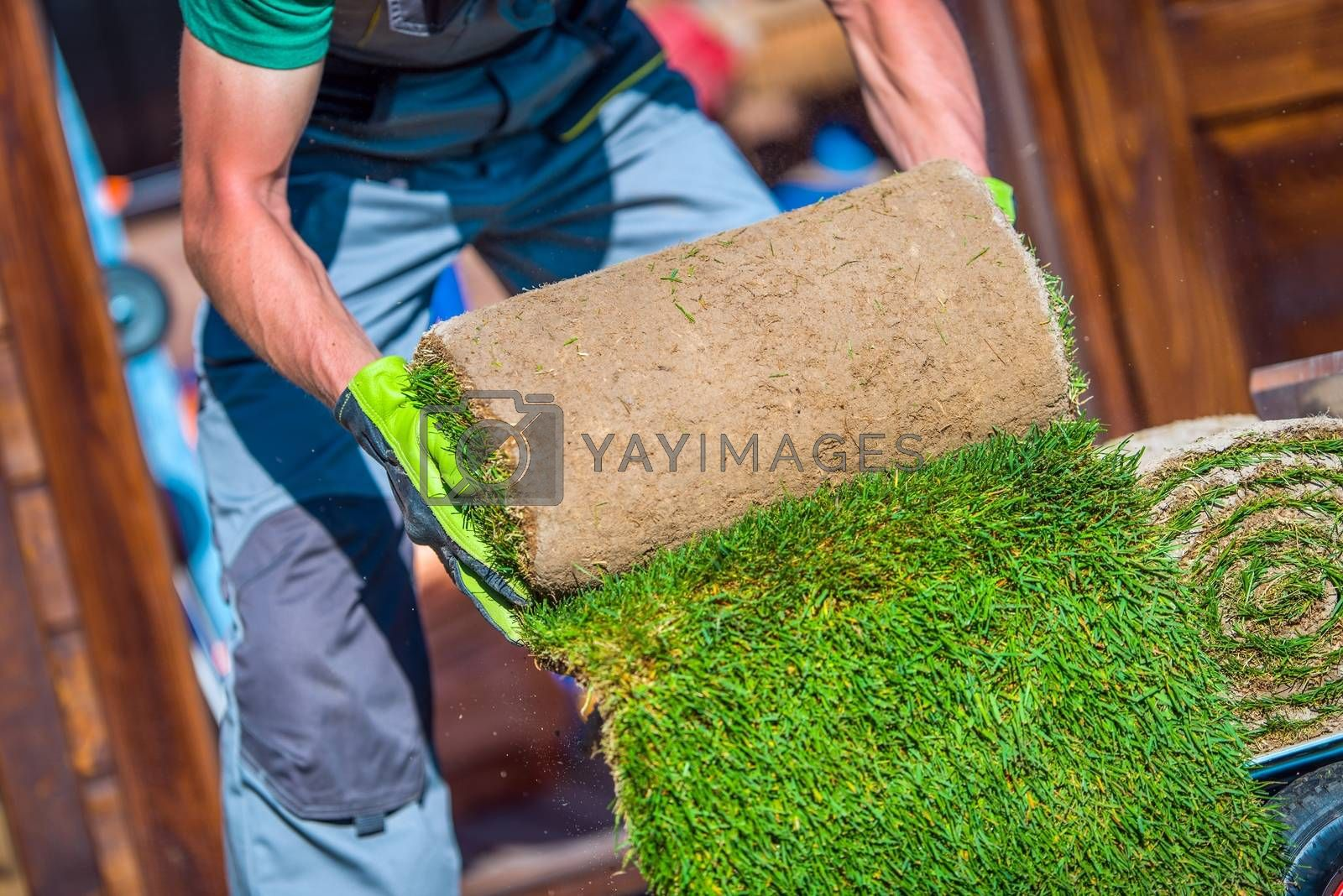 Royalty free image of Grass Turfs Garden Work by welcomia
