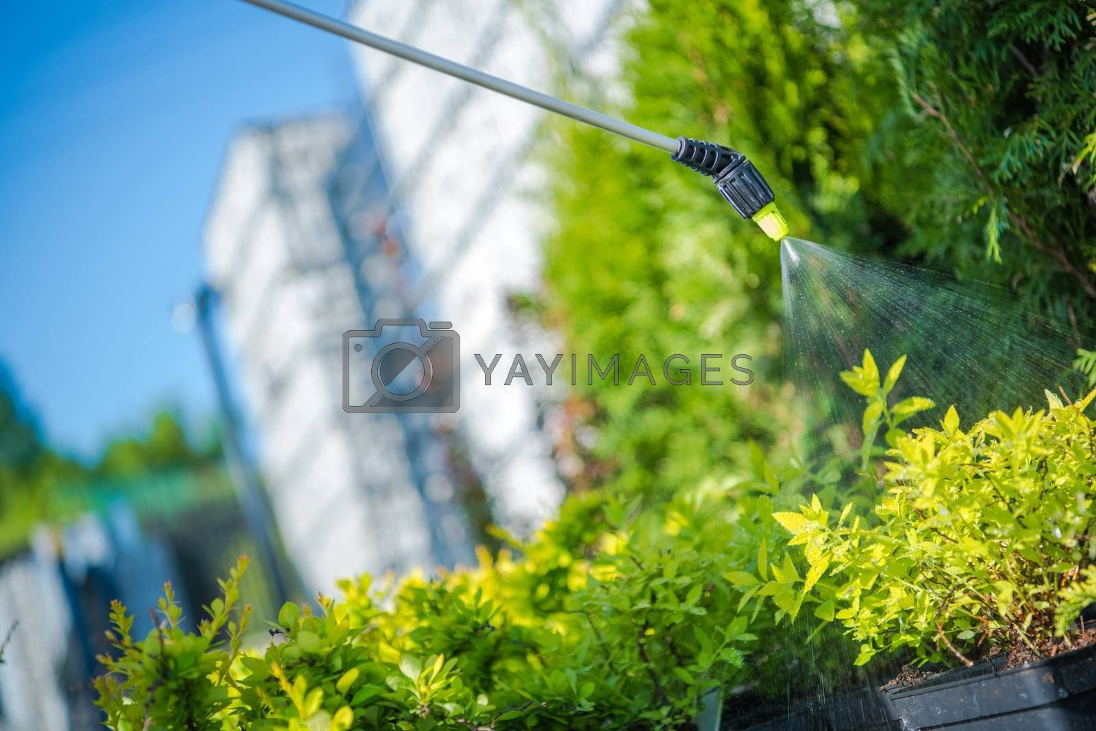 Royalty free image of Garden Plants Insecticide by welcomia
