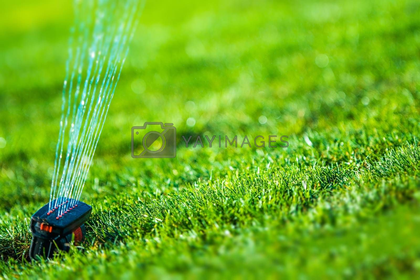 Royalty free image of Garden Grass Sprinkler by welcomia