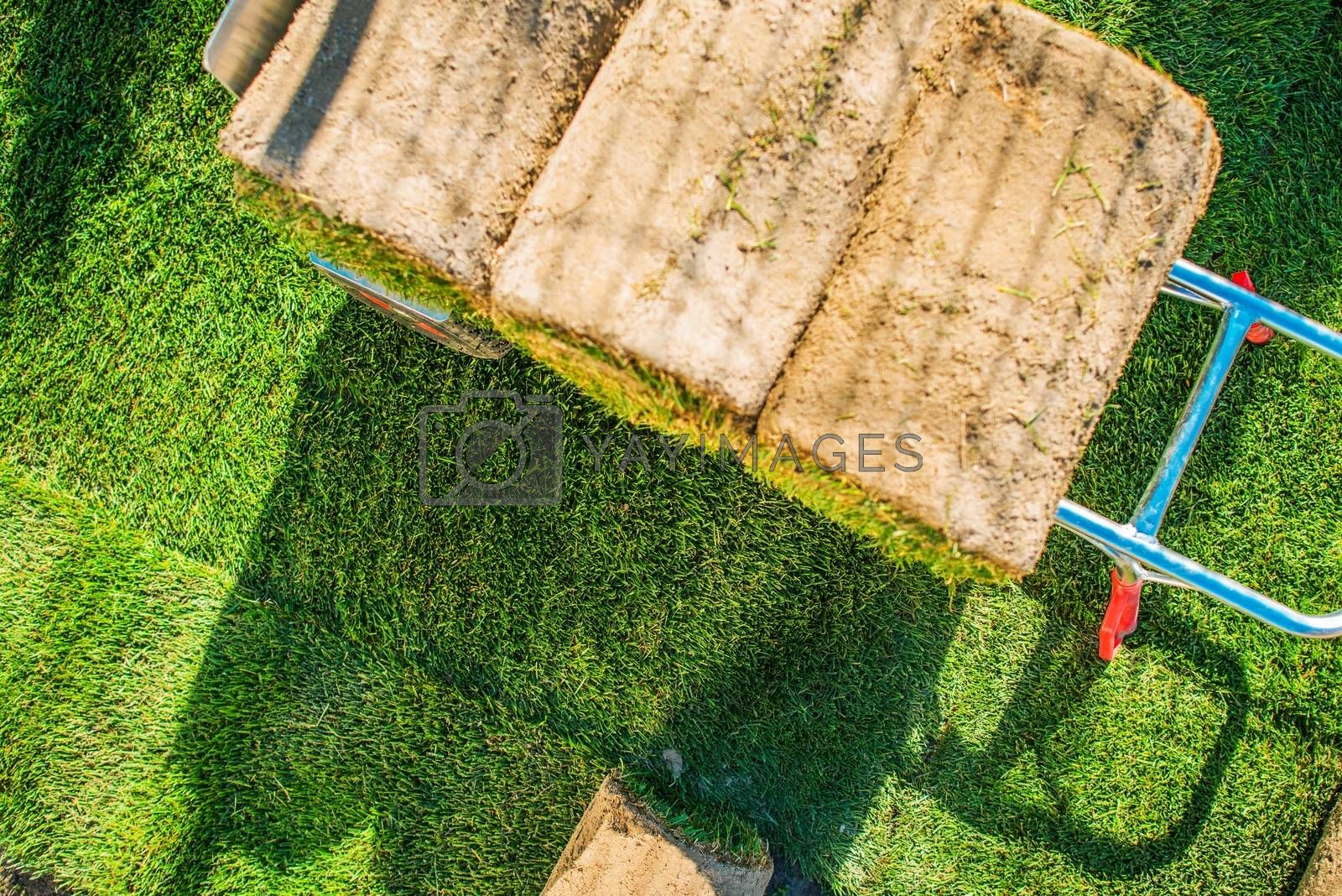 Royalty free image of New Grass For the Garden by welcomia