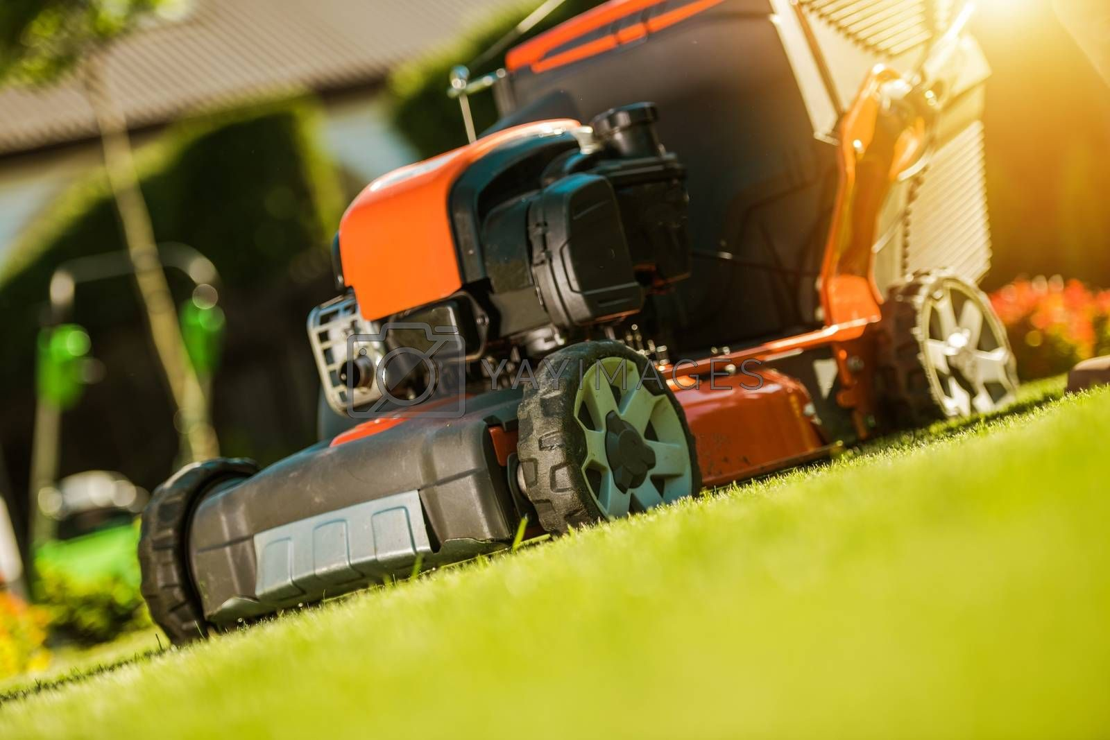 Royalty free image of Grass Field Mowing by welcomia
