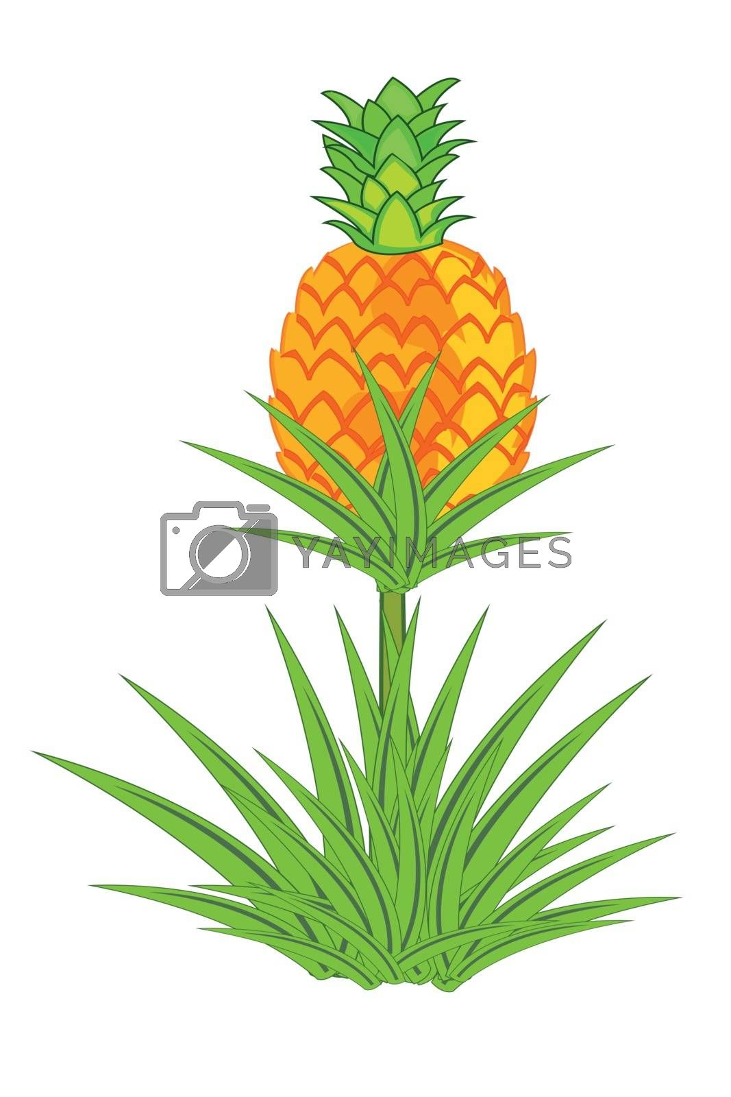 Royalty free image of Pineapple plant with roots isolated on white background. by cobol1964