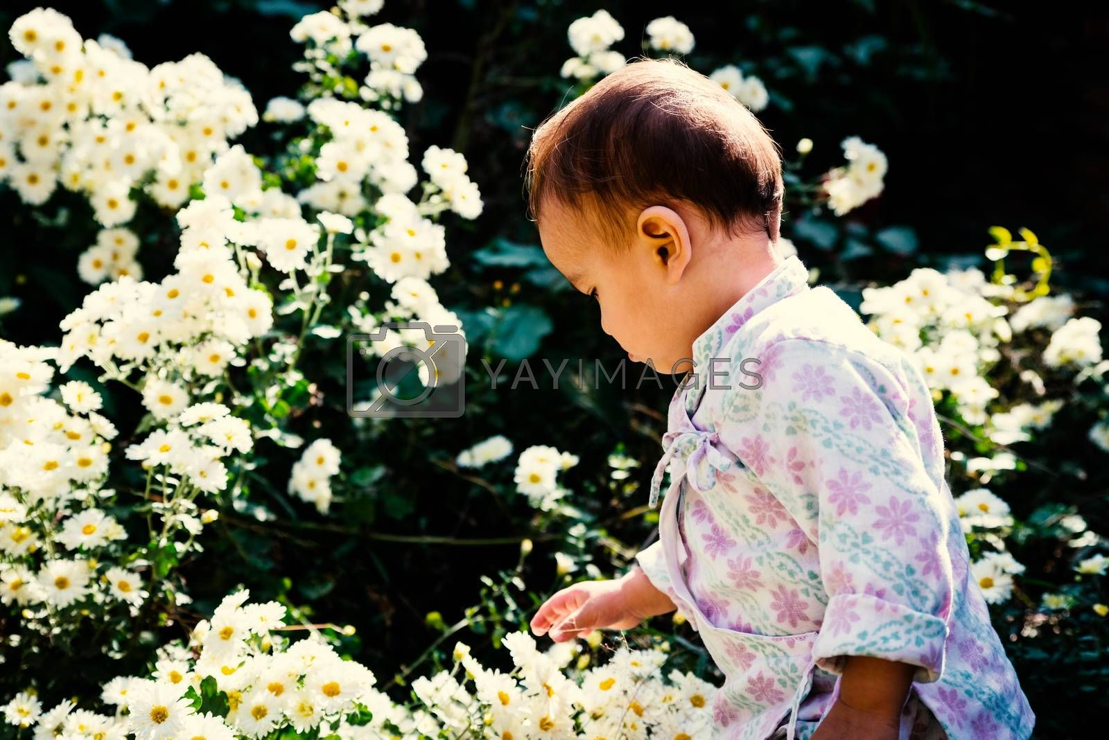 Royalty free image of Baby playing with white flowers in garden by dutourdumonde