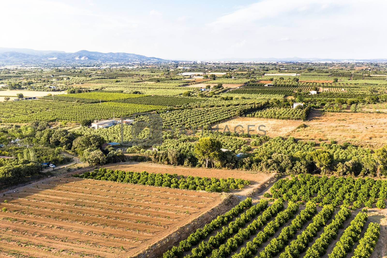 green and yellow fields in Tarragona from above, agricultural industry aerial view