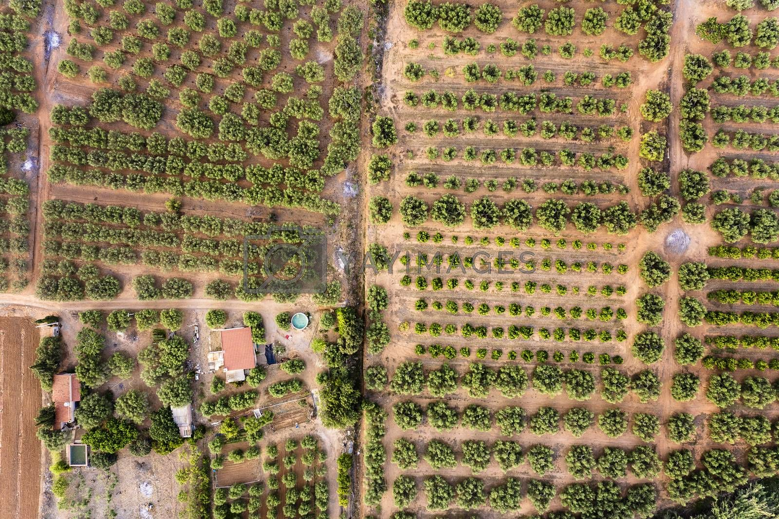 top view of different crop fields of a farm and its plantation, field background agricultural industry aerial view
