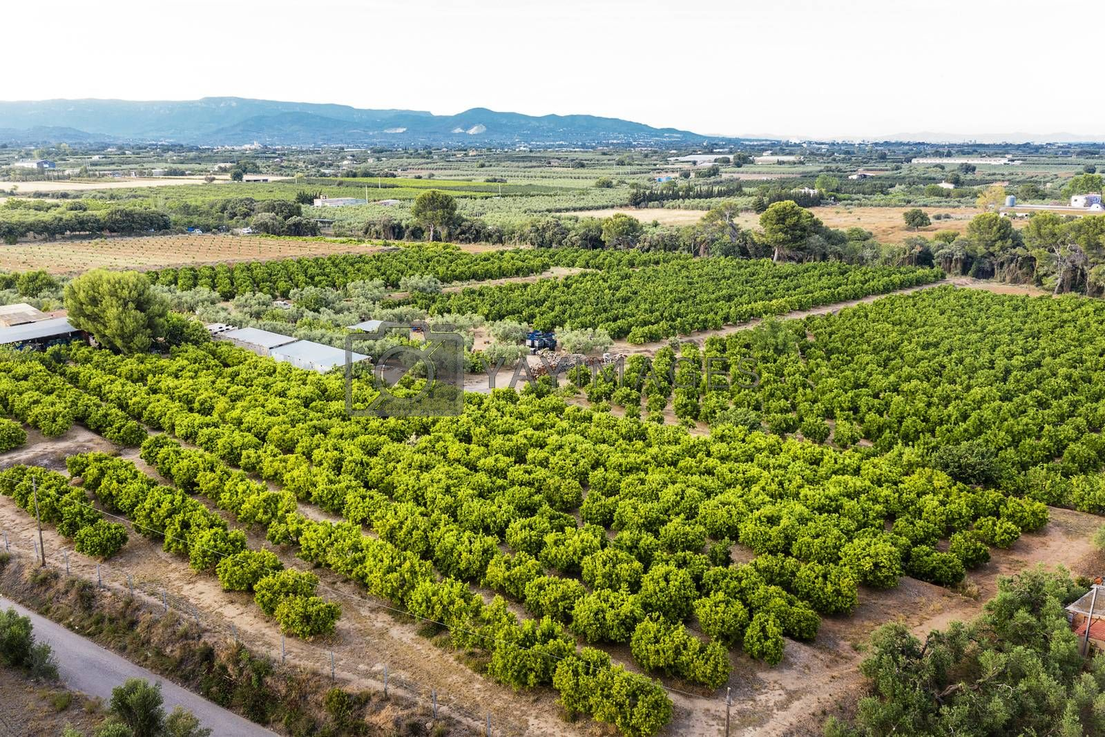 top view of a fruit tree plantation of a farm near of the mountains in Tarragona, green field agriculture industry aerial view