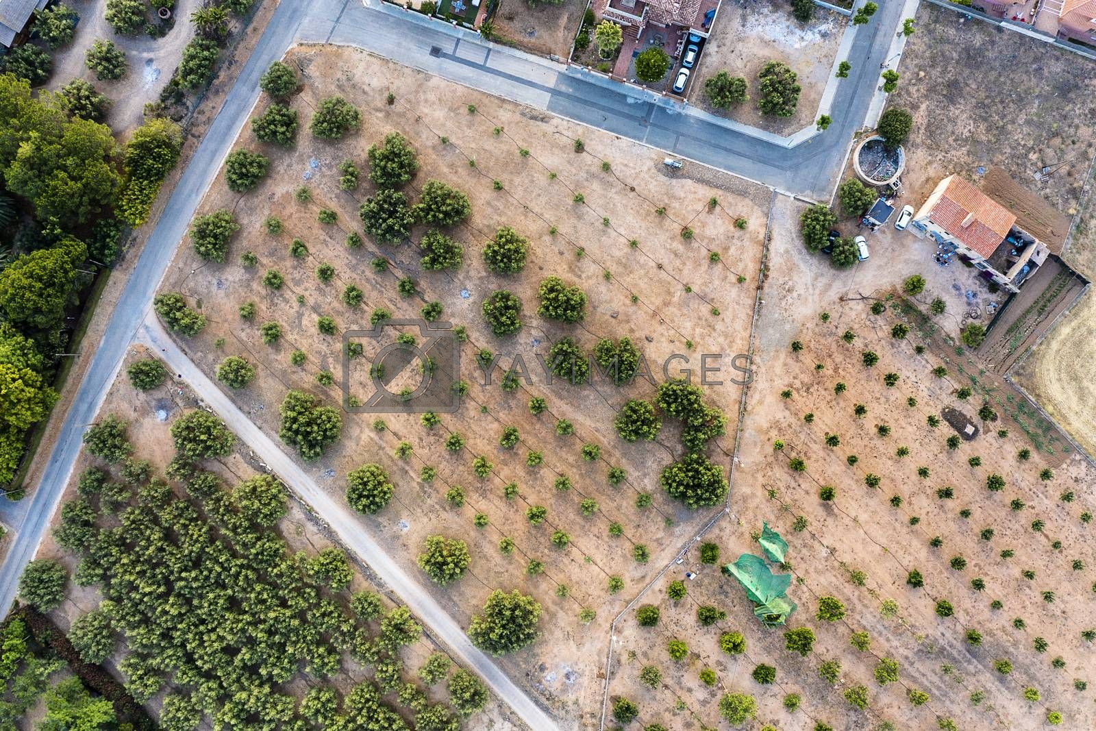 top view of a farm and its crops, field background agricultural industry aerial view