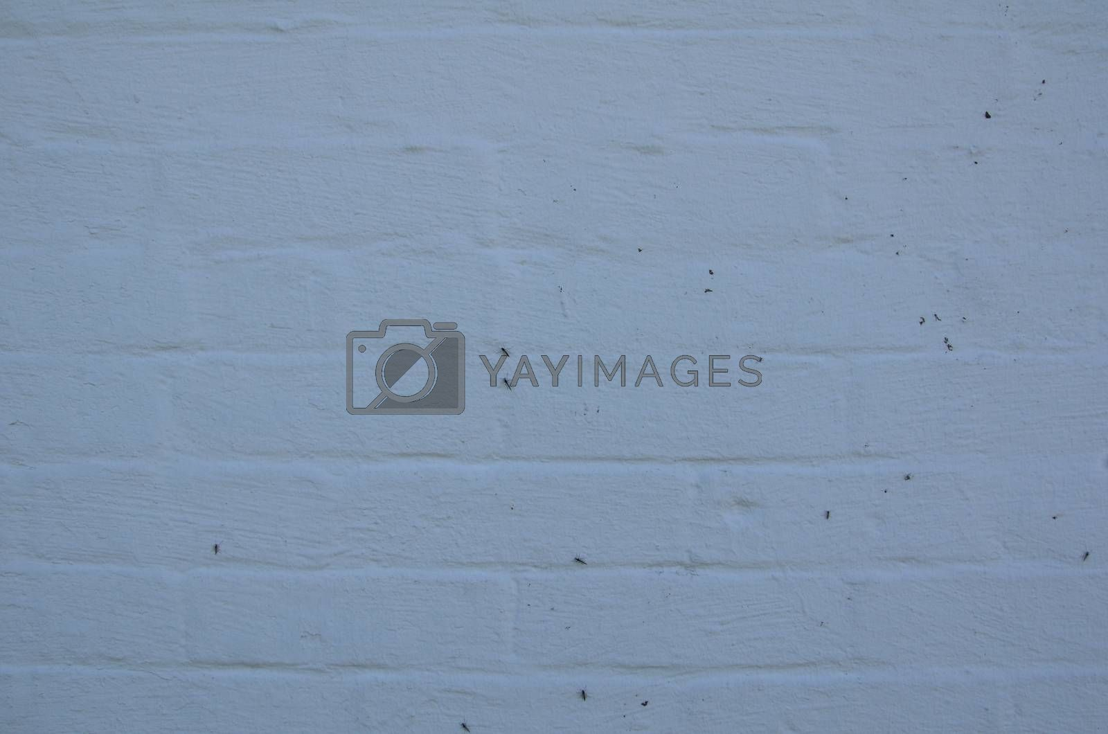 Royalty free image of white wall or surface with mosquito insects by stockphotofan1