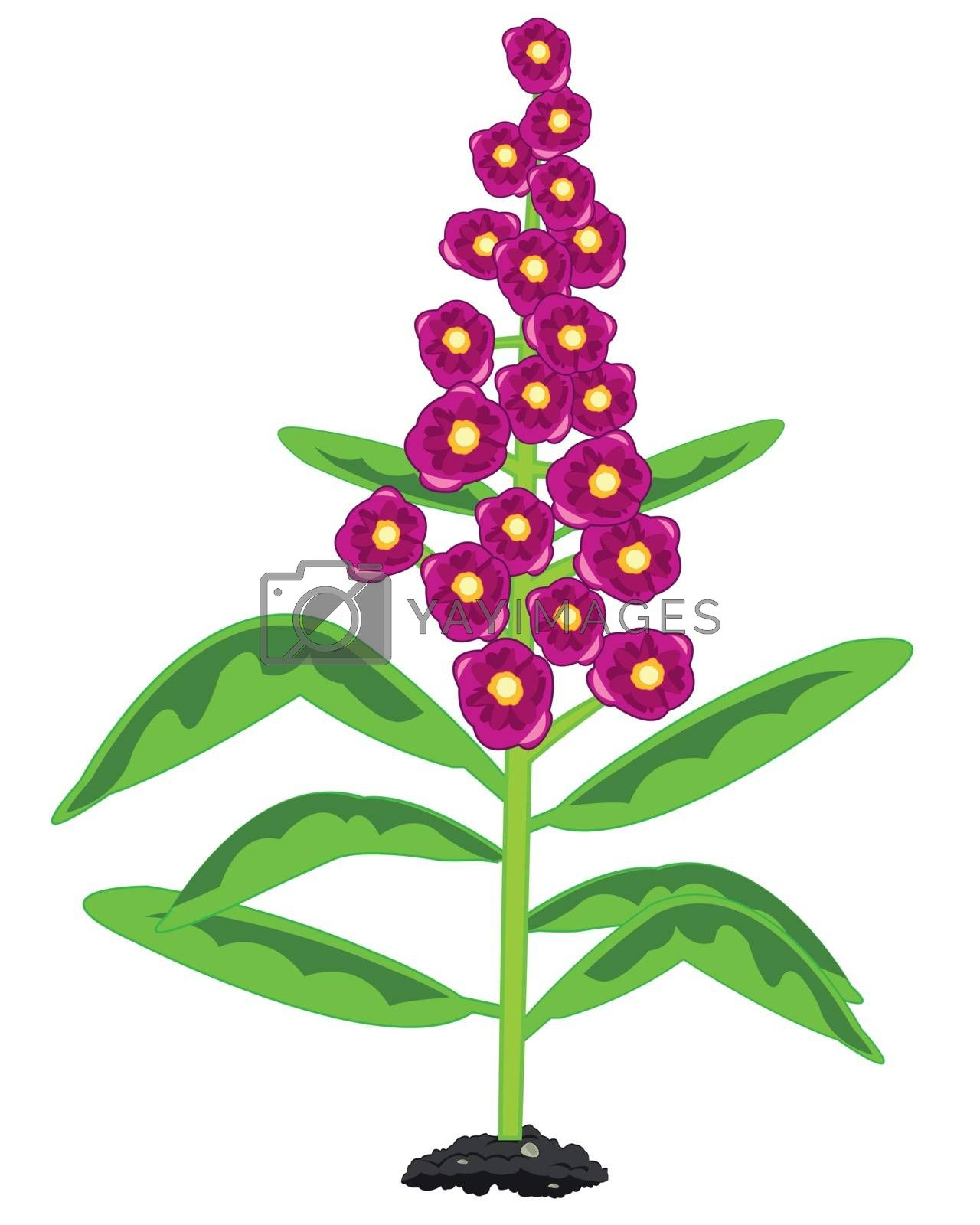 Royalty free image of Decorative plant with beautiful flower of the rose colour by cobol1964