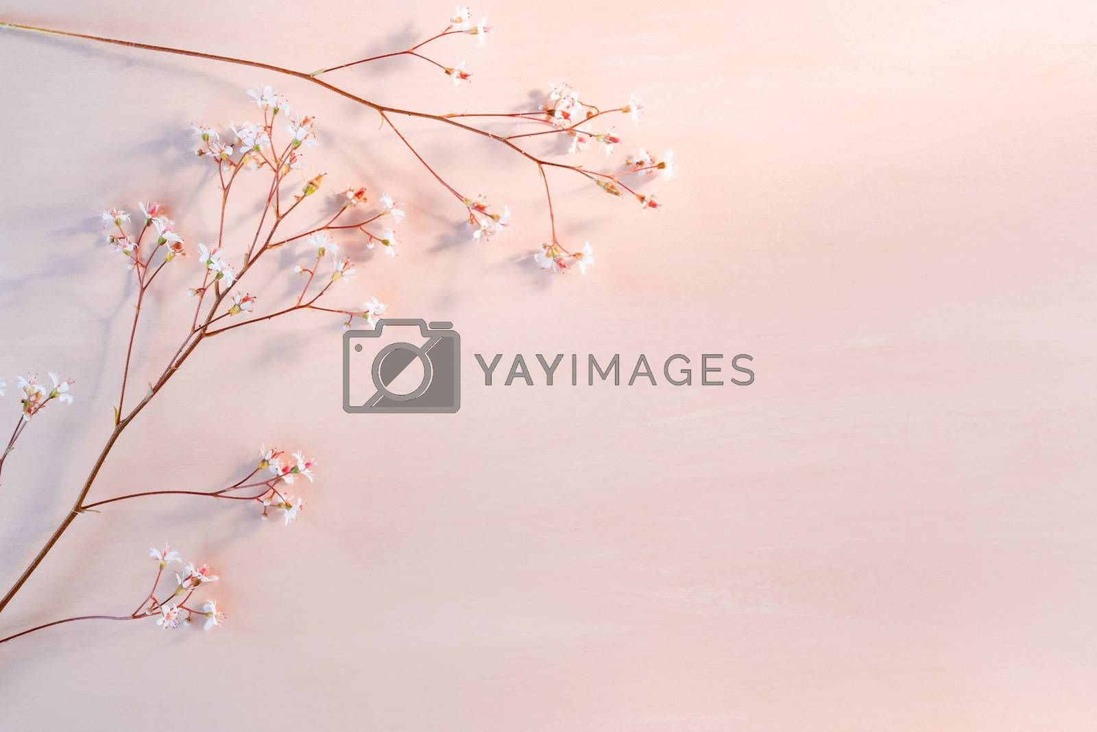 Royalty free image of Sprigs with small white flowers on a wooden coral background with space for text - beautiful floral background by galsand