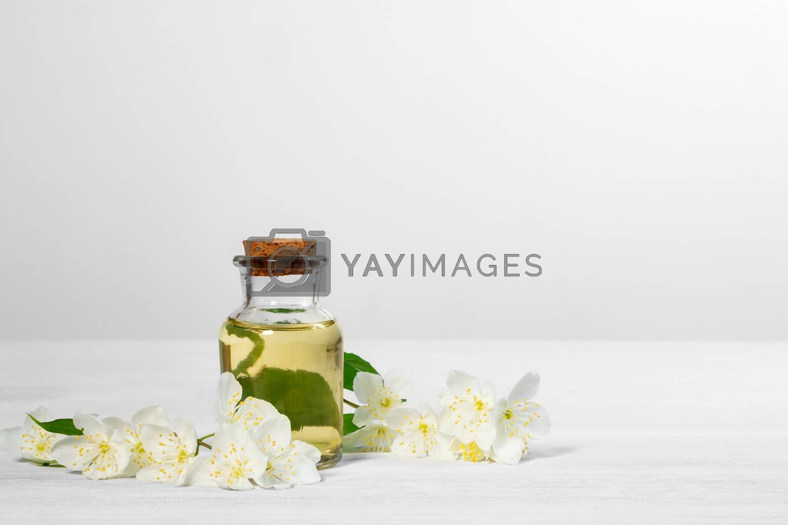 Royalty free image of flowers of philadelphus somewhere called jasmine or mock orange and a bottle of oil on a white wooden table by galsand