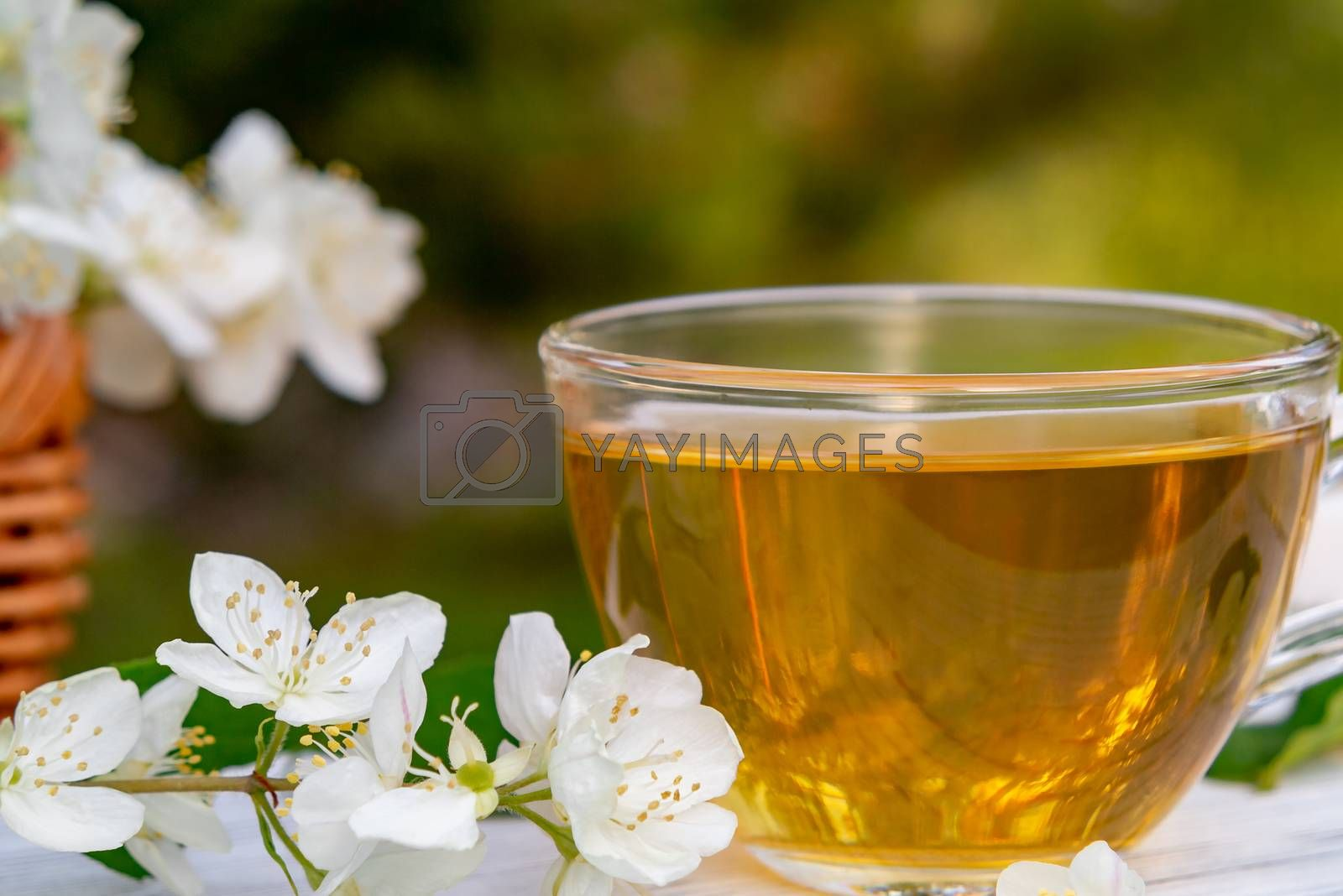 Royalty free image of Flowers and petals of philadelphus somewhere called jasmine or mock orange and Cup with fragrant jasmine tea on a white wooden tray outdoors in summer, close up by galsand