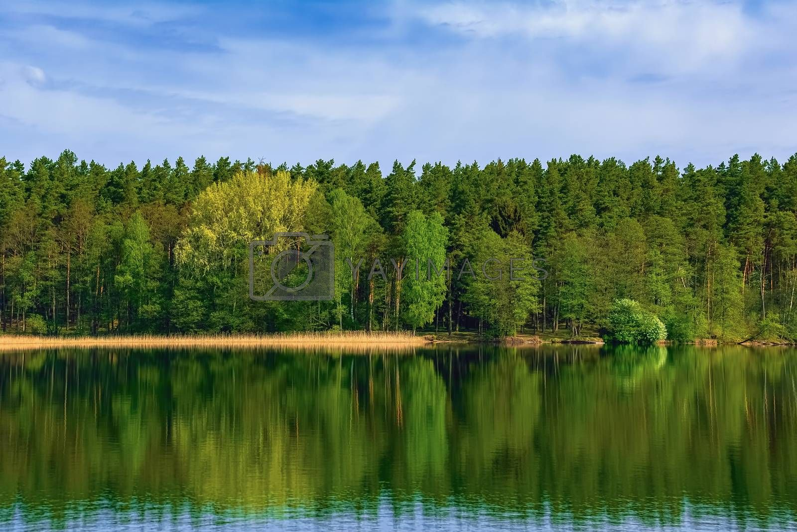 Forest on the lake shore in Poland
