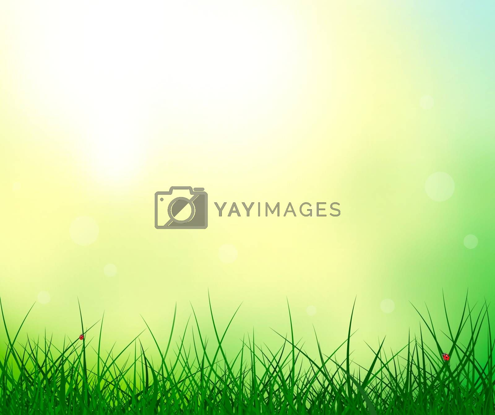 Abstract summer background. Grass on sunshine background. Ladybug on the grass. Nature scene, details.