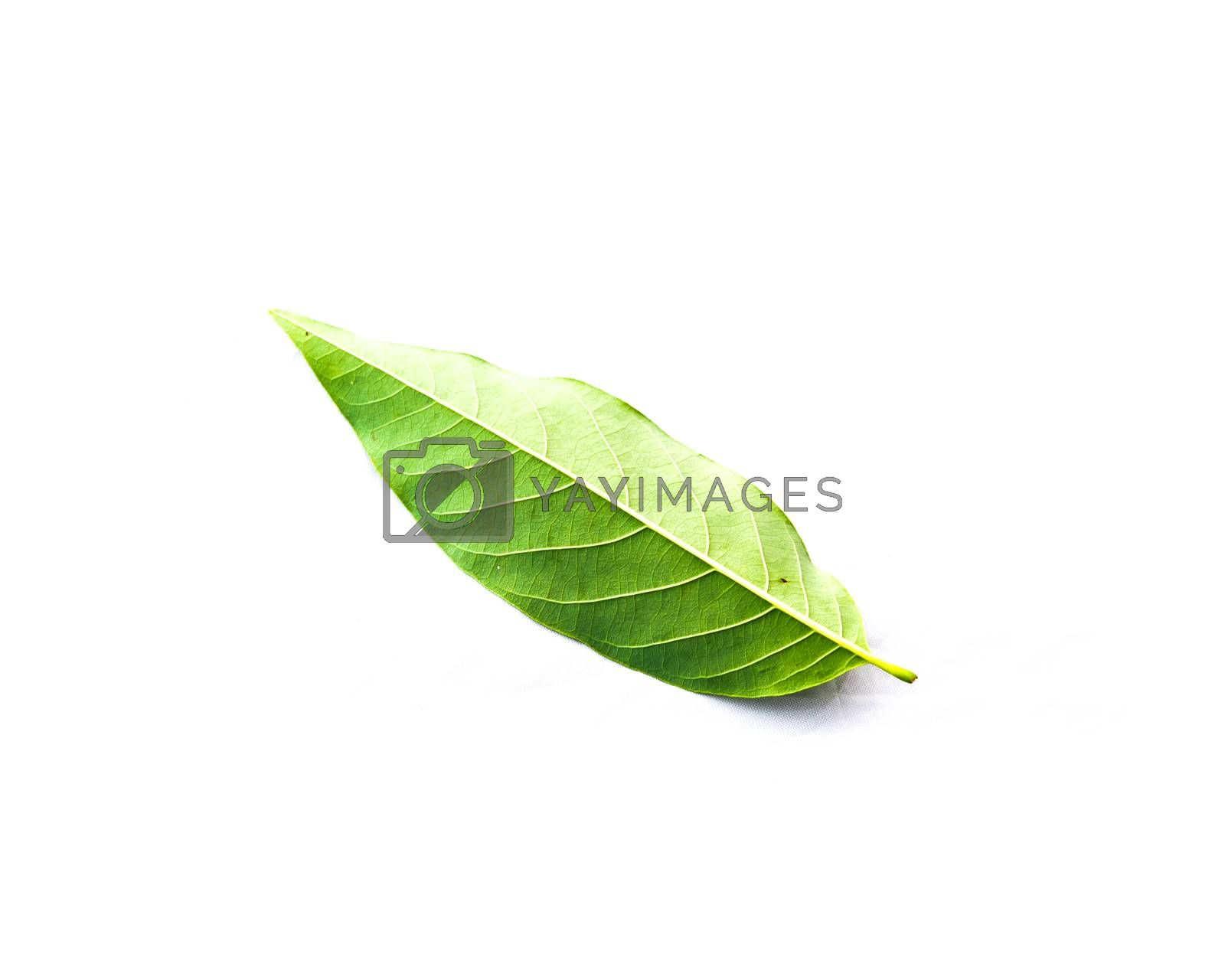 Studio shot single custard apple or sugar-apple, sweetsop leaf isolated on white background. It is the fruit of Annona squamosa, a native of the tropical Americas and West Indies