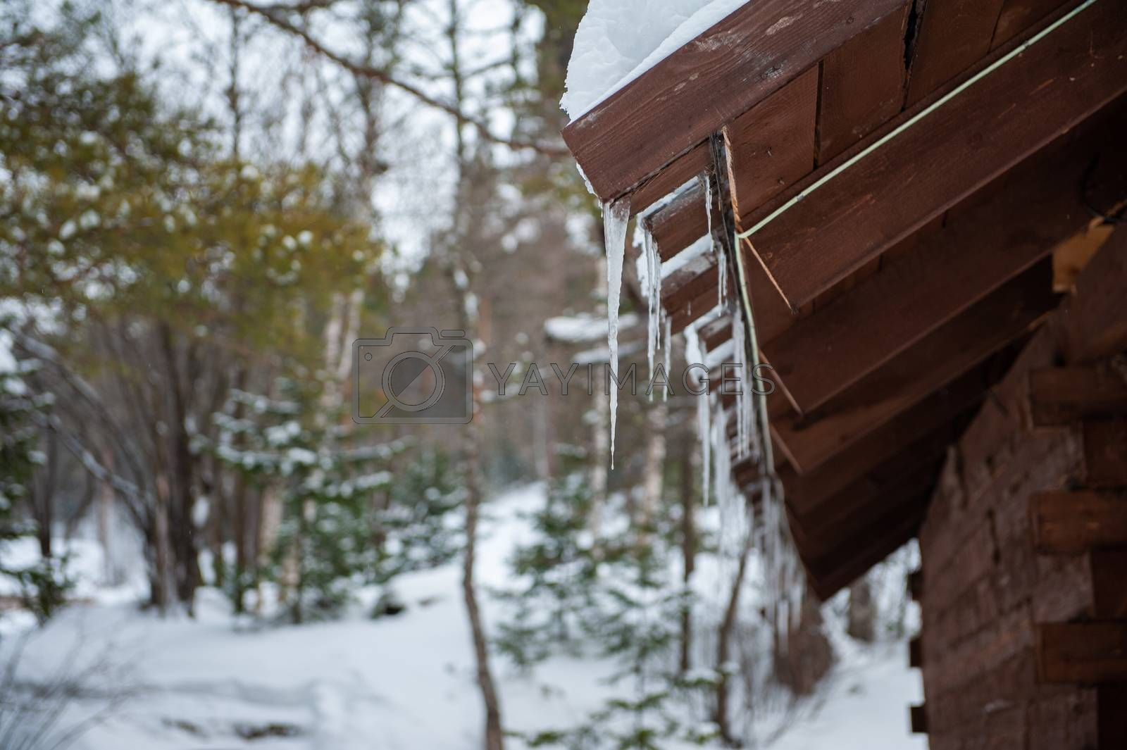 Closeup photo of the Icicles hang from the roof of wooden house