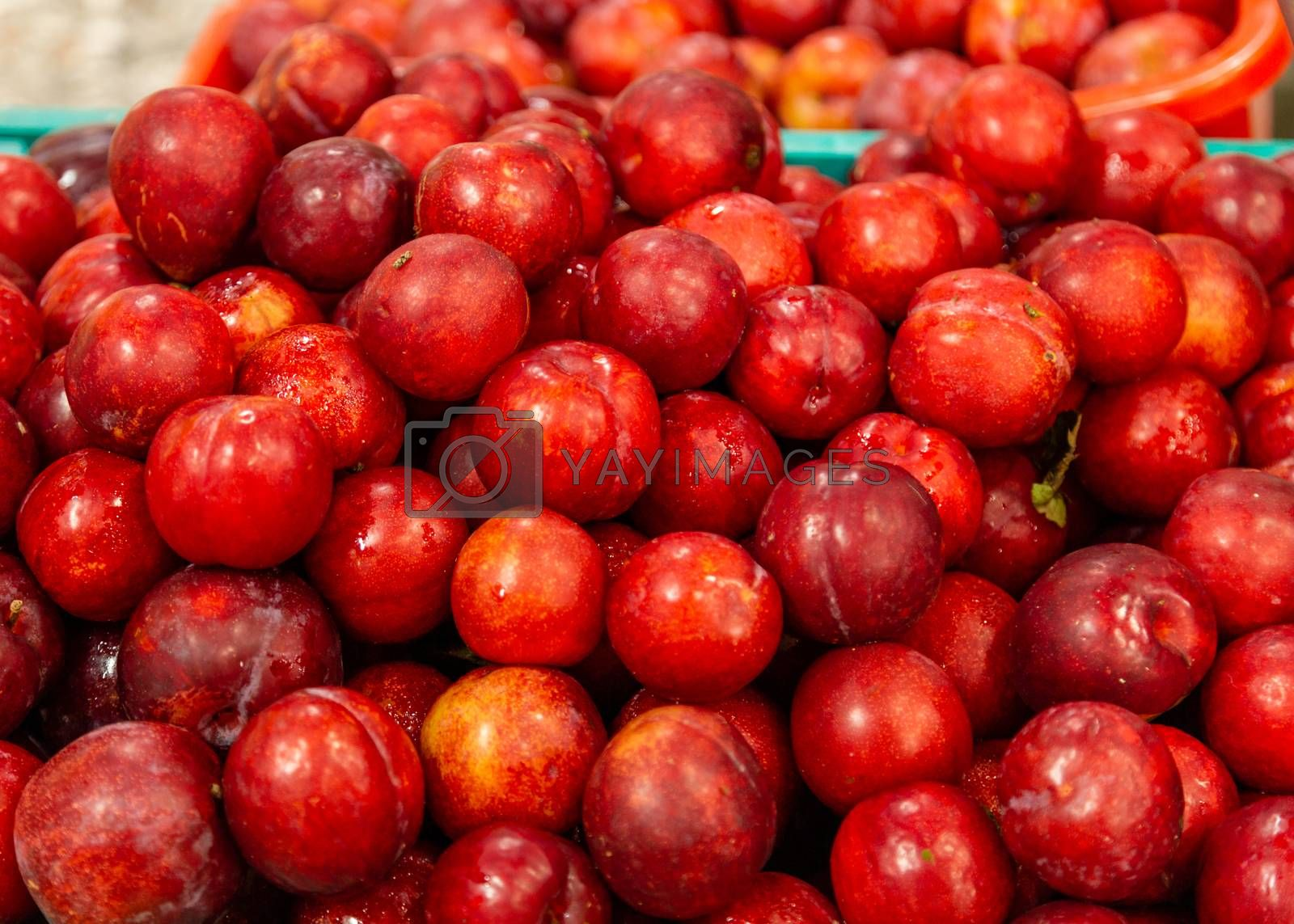Fresh red plums by Images By Kenny