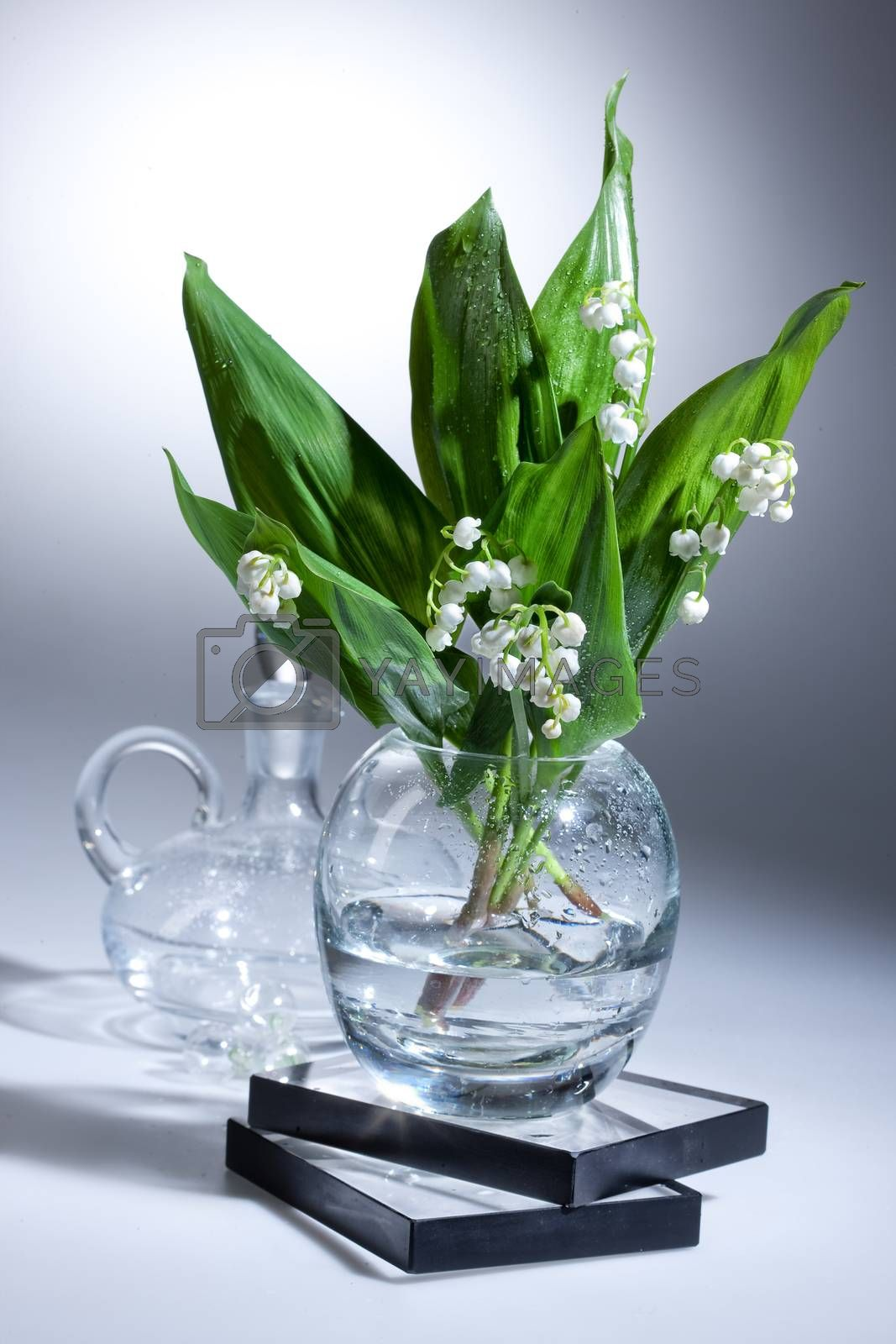 Lily Of The Valley by Fotoskat