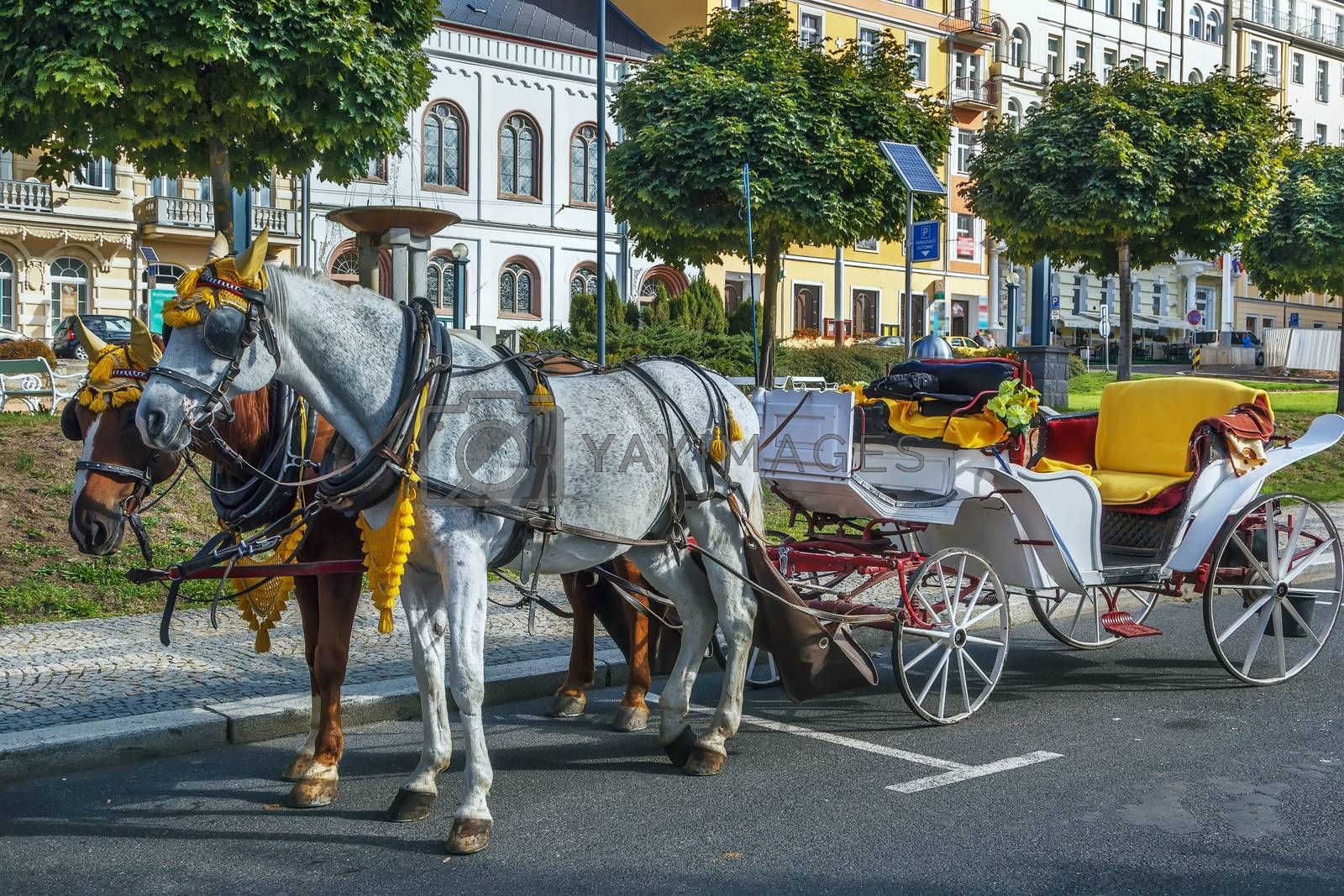 carriage in Marianske Lazne, Czech republic by borisb17