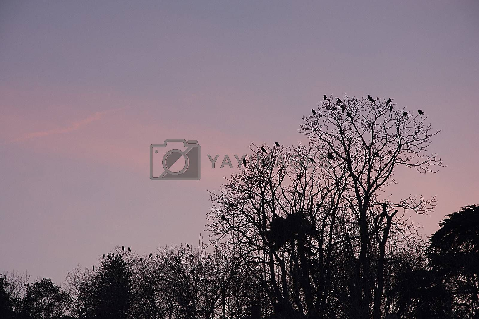 Sunsets and birds by Nursel