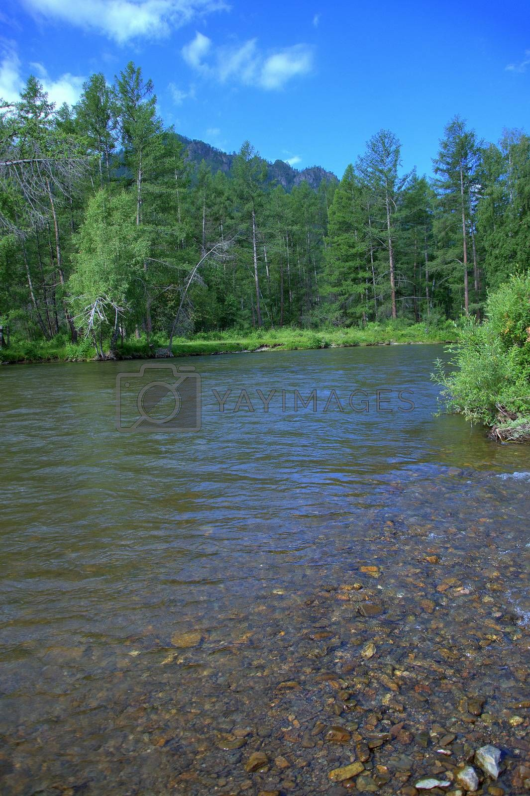 A calm, shallow river flowing in line with rocky shores surrounded by forests. by Alex Yellow