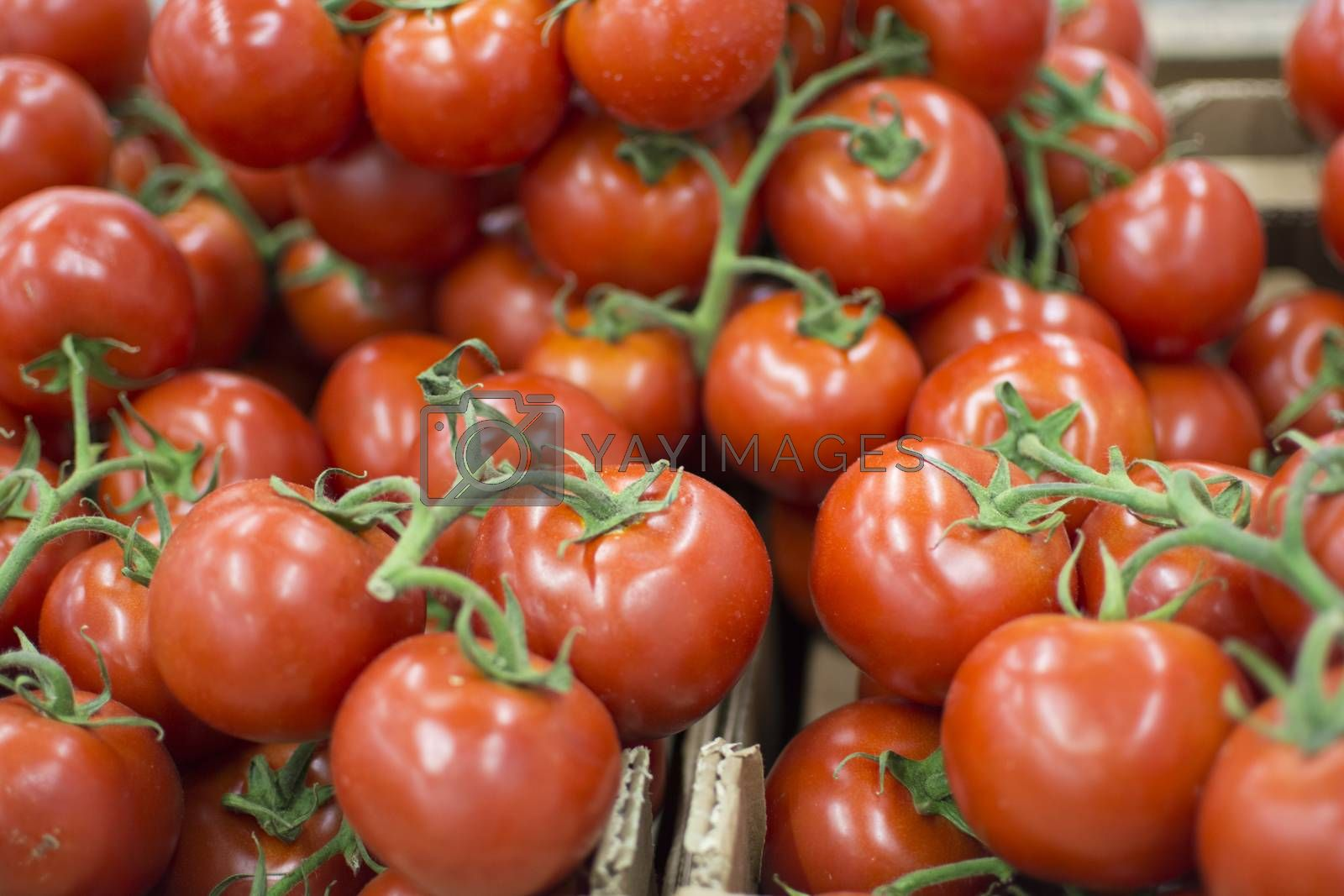 tomatoes by Nursel