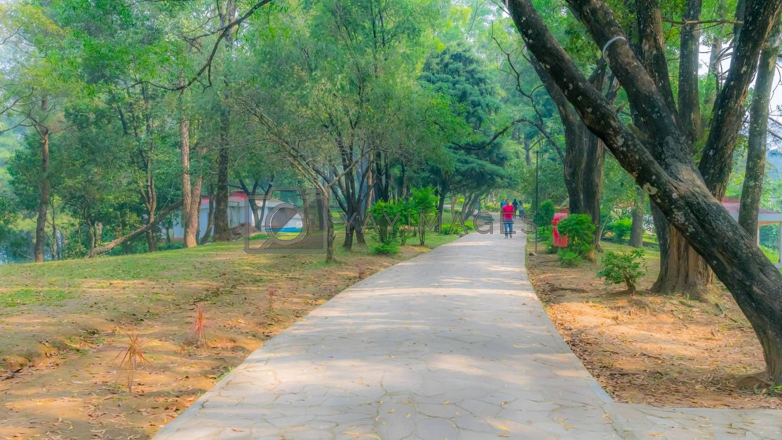 An Early Evening in city park, bright sunlight and shadows, summer season, beautiful landscape. Central Park Late Morning Kolkata. Contrast of dark trunks with green leaves and grass is breathtaking.
