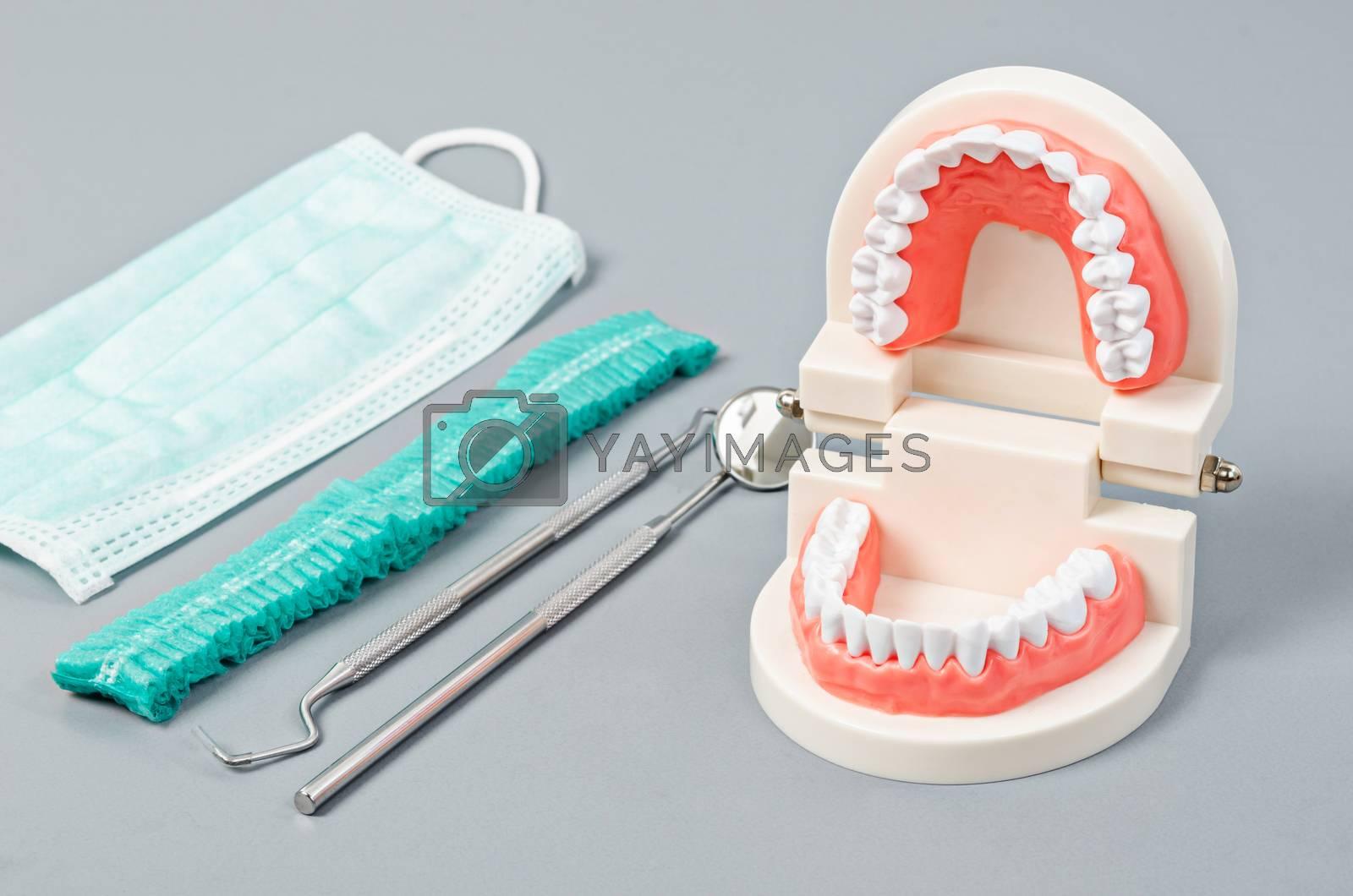 Model teeth with dental tools.  by Gamjai