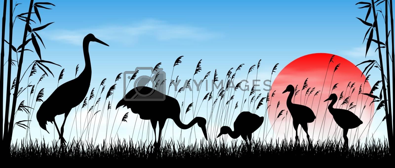 Birds cranes on sunrise background. Morning, sky, sun. Birds on a background of grass, bamboo and reeds. Evening landscape. Wildlife scene.