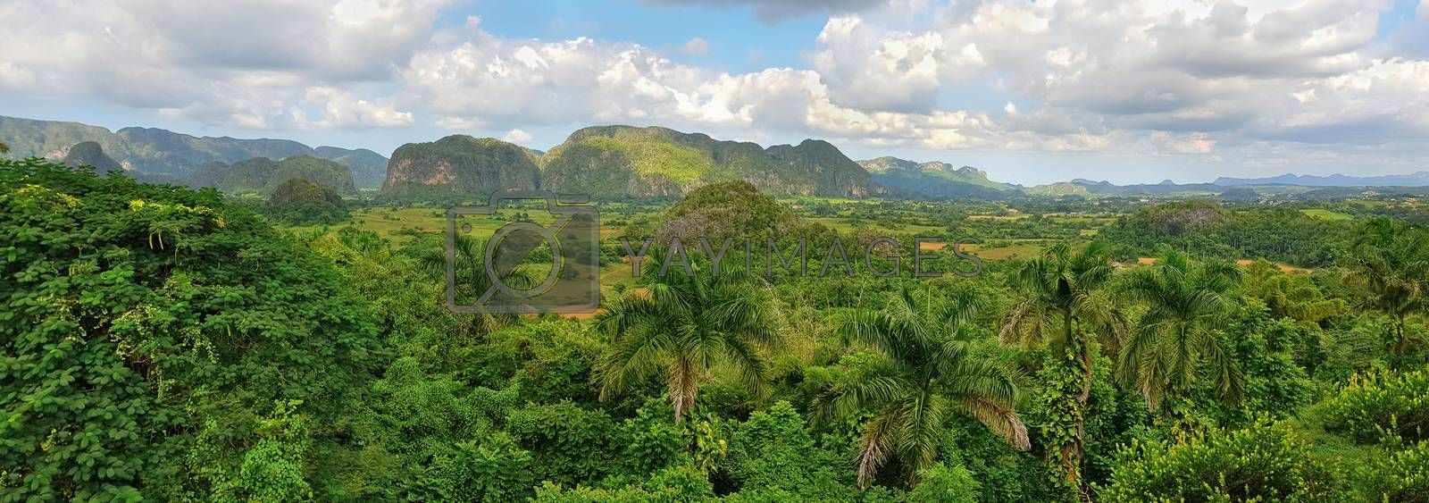 Panoramic view of green rain forest near Vinales, Cuba.