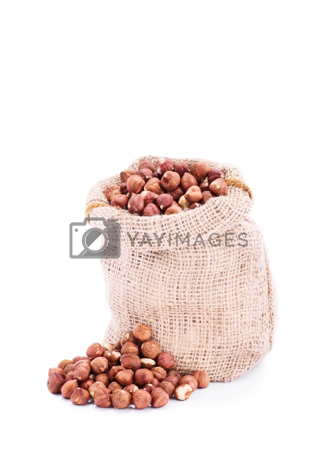 Small burlap sack of fresh hazelnuts, isolated on white background.