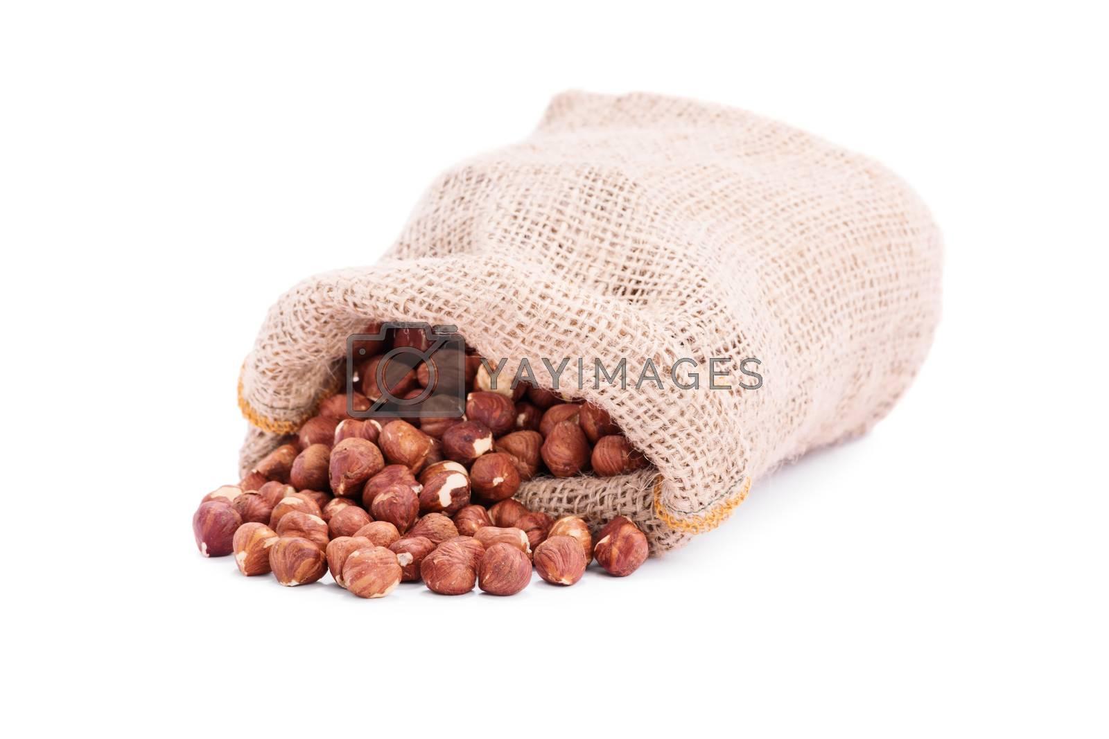 Spilled burlap sack of hazelnuts, isolated on white background.