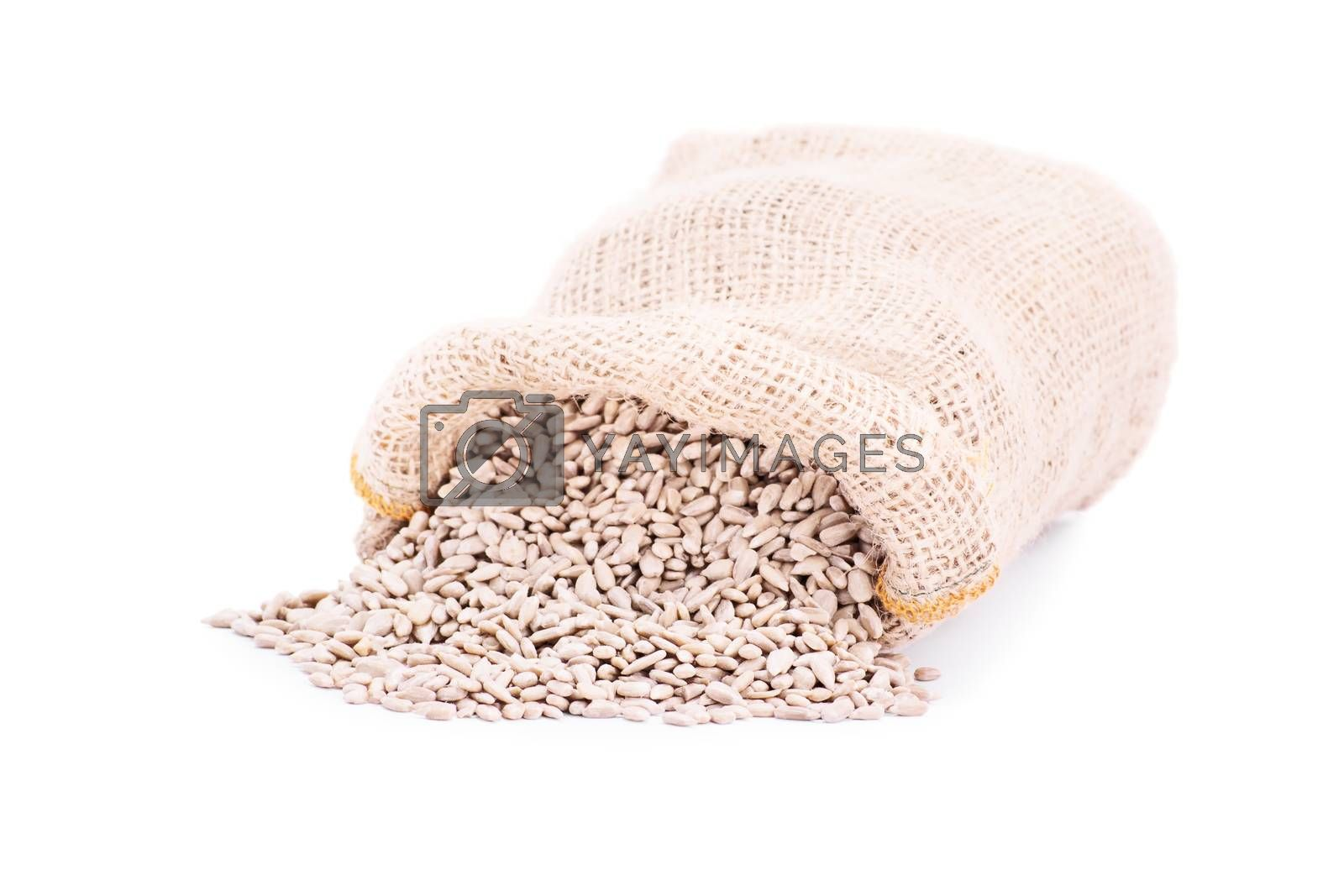 Spilled burlap sack of sunflower seeds, isolated on white background.