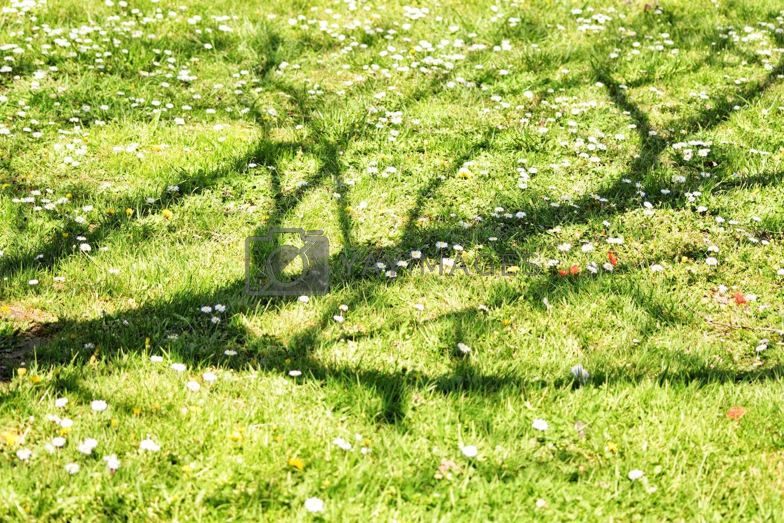 Withered tree shadow over green grass on a sunny day.