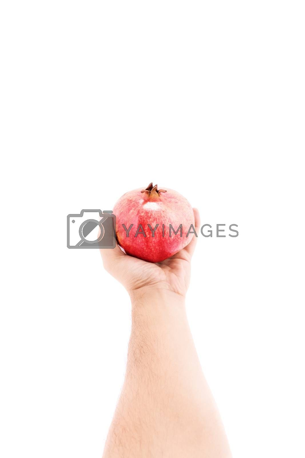 Male hand offering a pomegranate, isolated on white background.