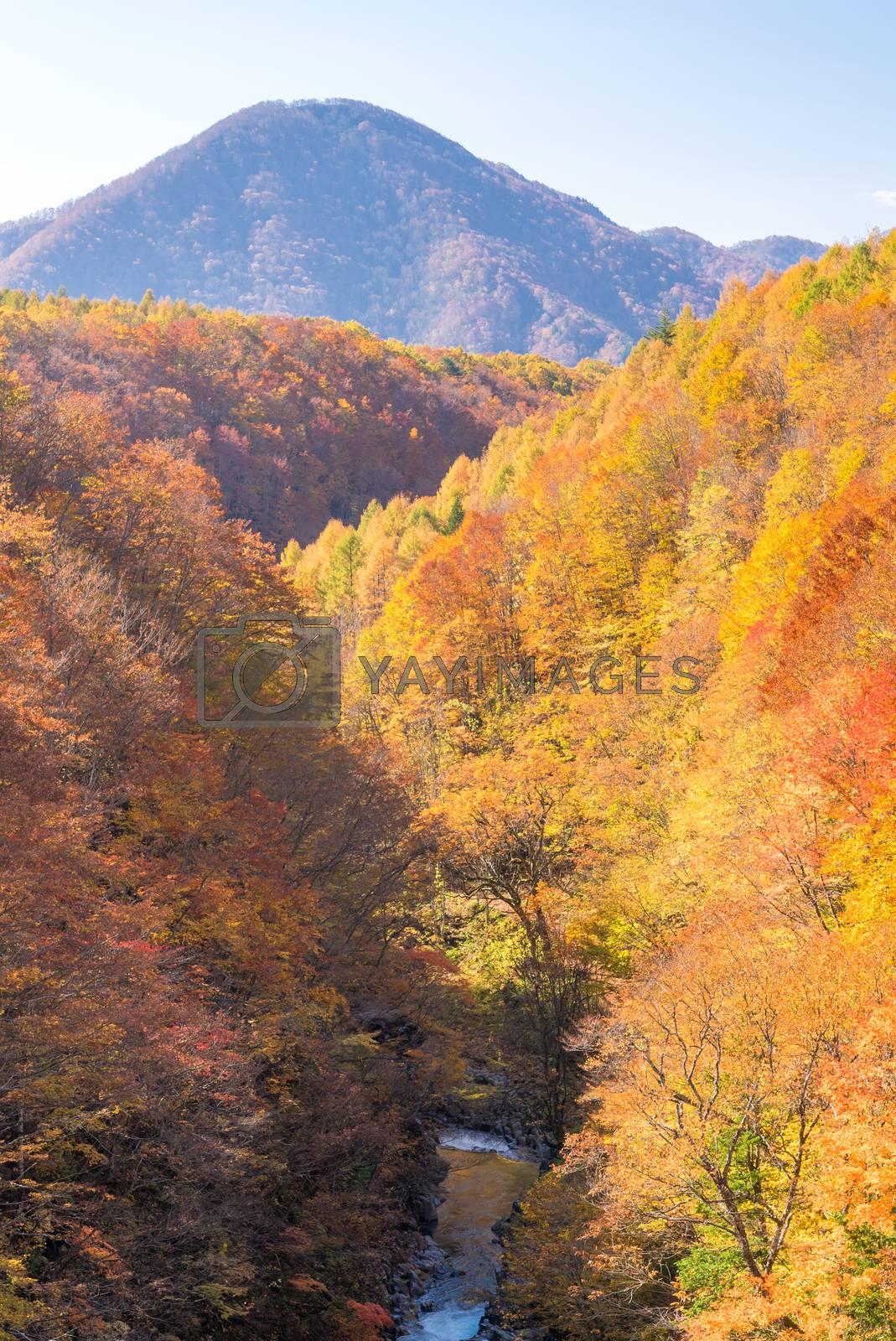 Nakatsugawa gorge from bridge at Fukushima in autumn fall Japan