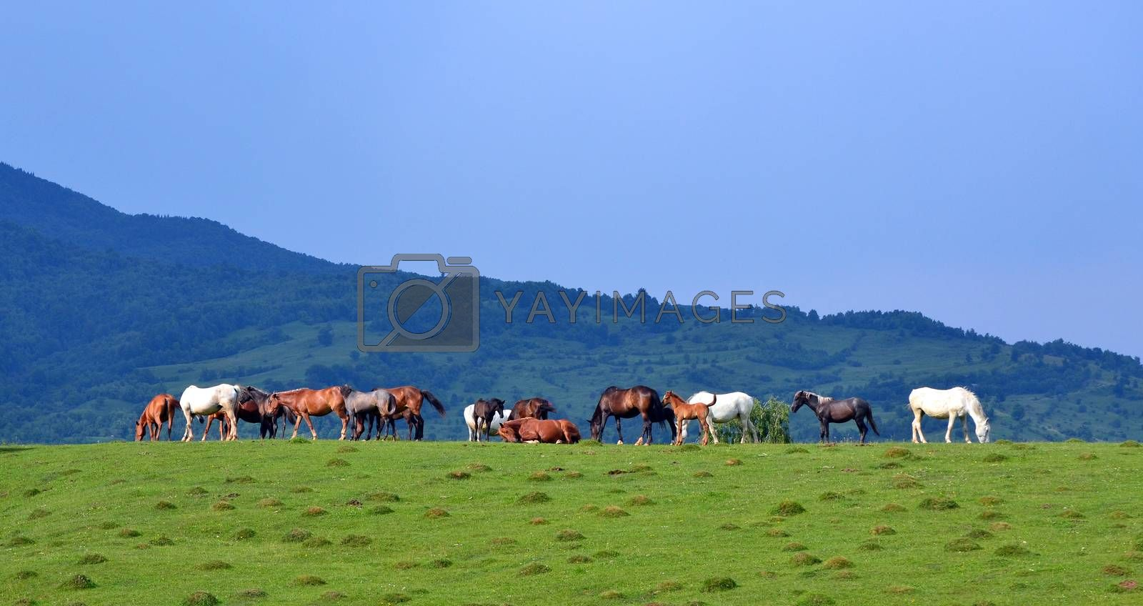 Countryside landscape with herd of horses