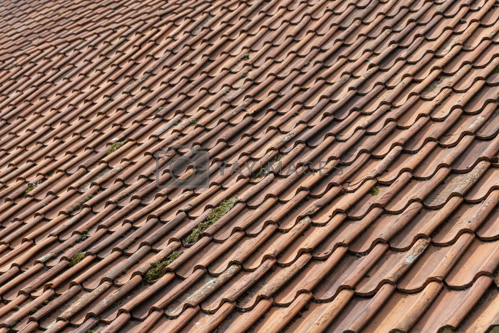 Red orange ceramic tiles on a large roof of an old Dutch farm