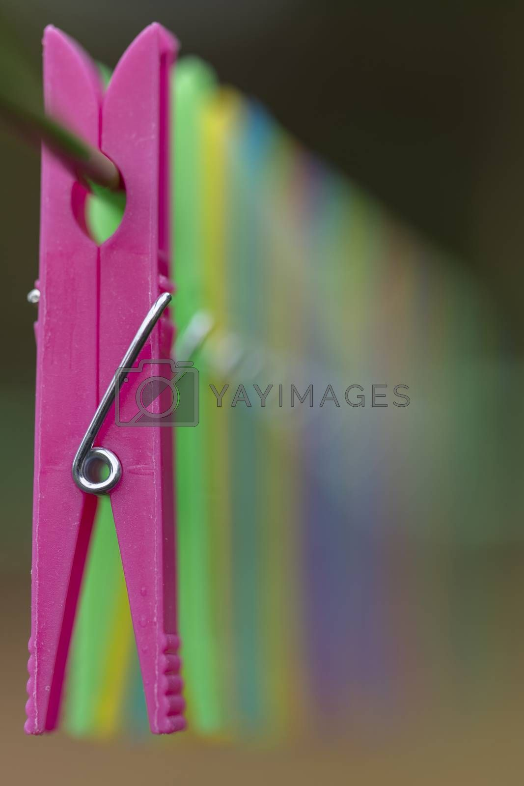 Colored clothes pegs in a row on a drying rack with little depth