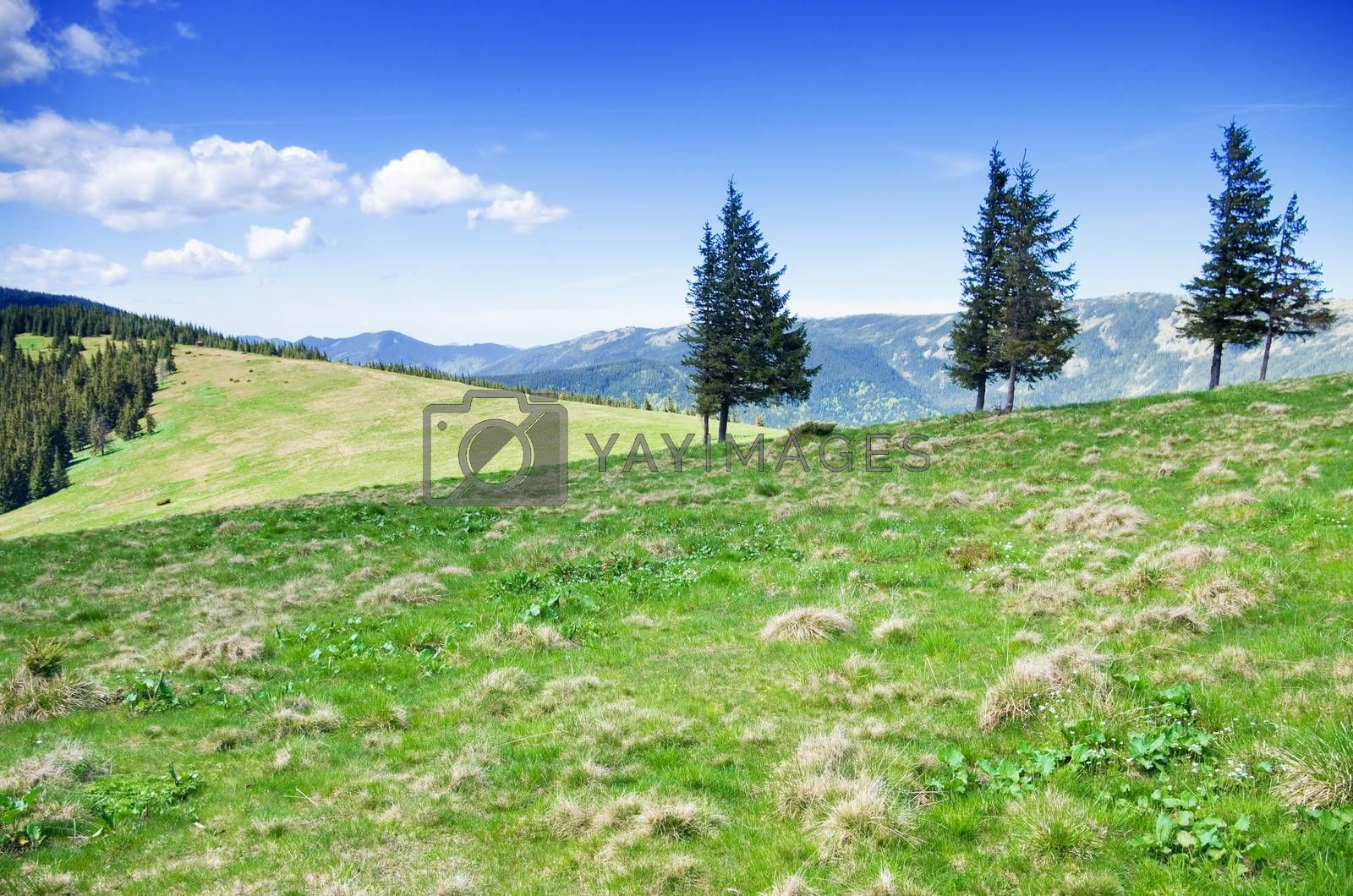 Pastures and Green Hills of the Carpathian Mountains
