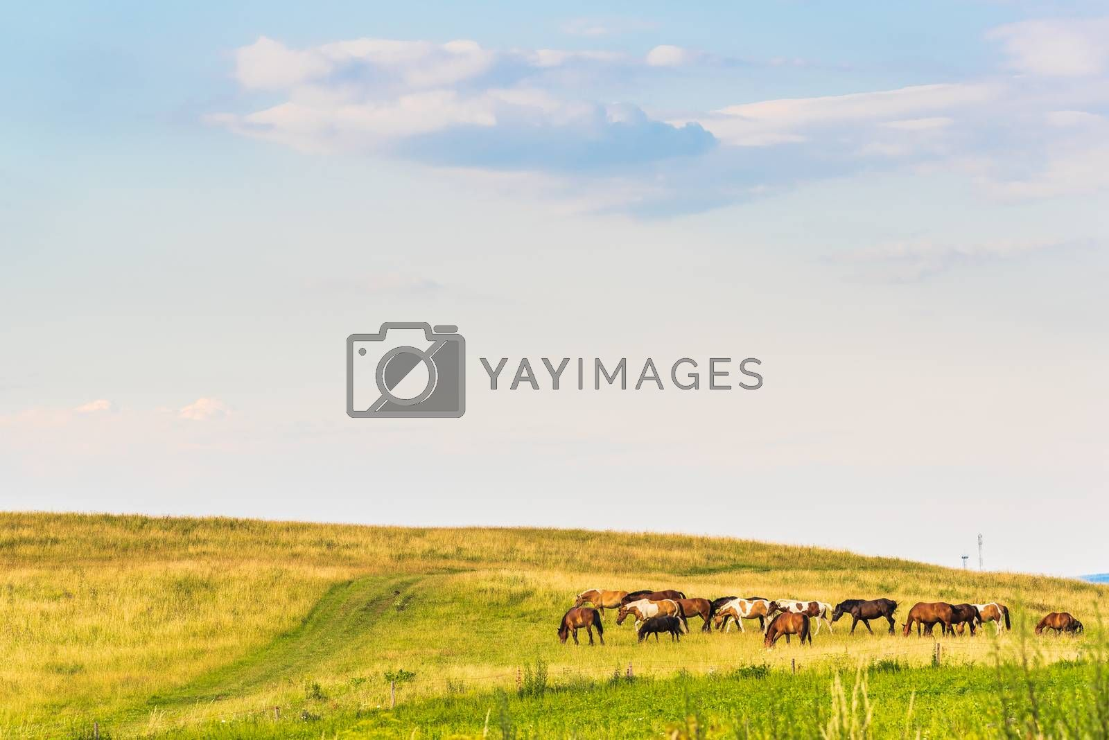 A horses in a field landscape