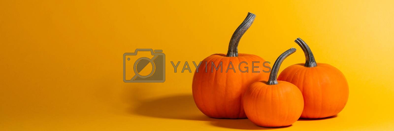 Holiday halloween background with pumpkins on orange, copy space for text