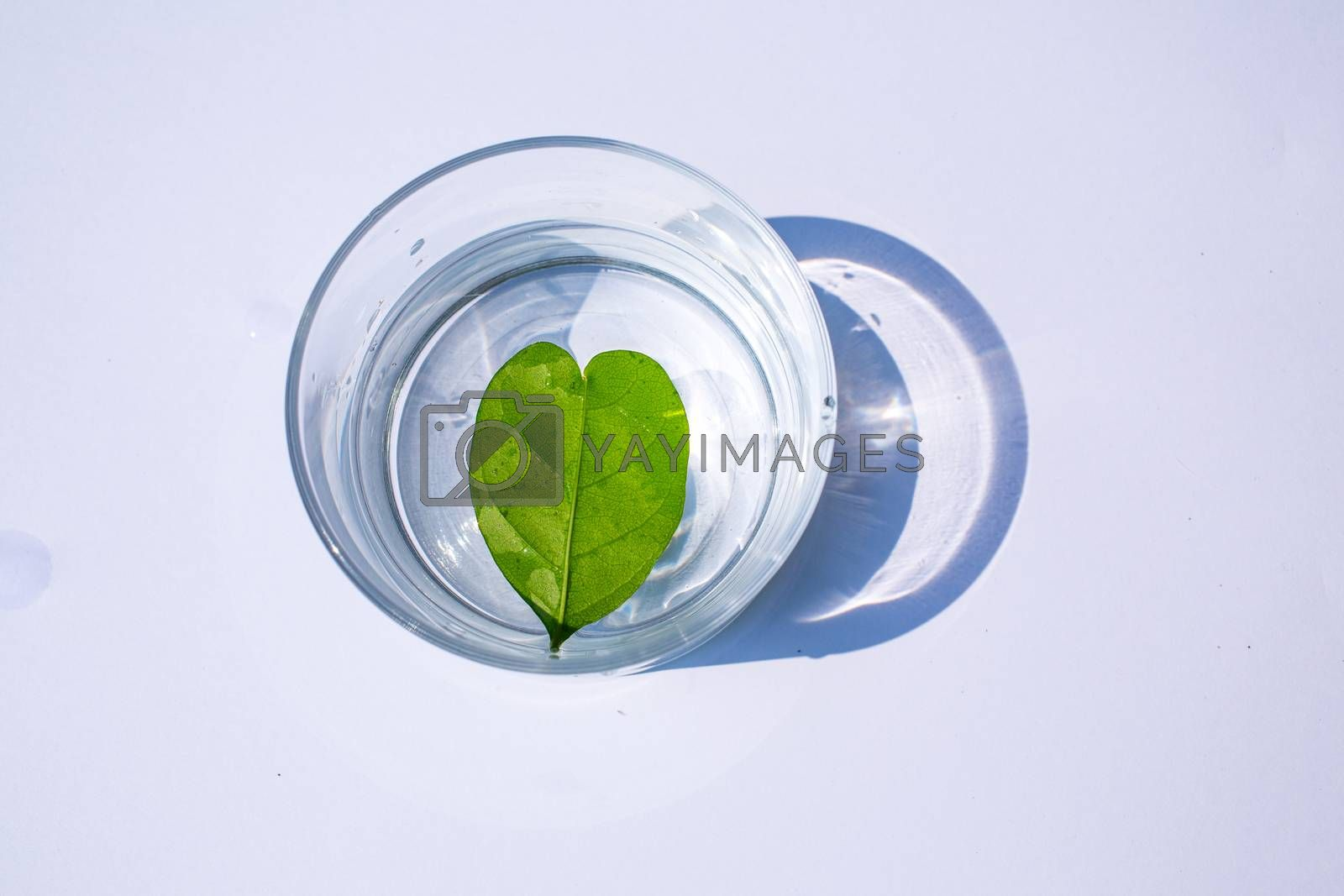 Heart leaf shape in glass of water  isolated on white background